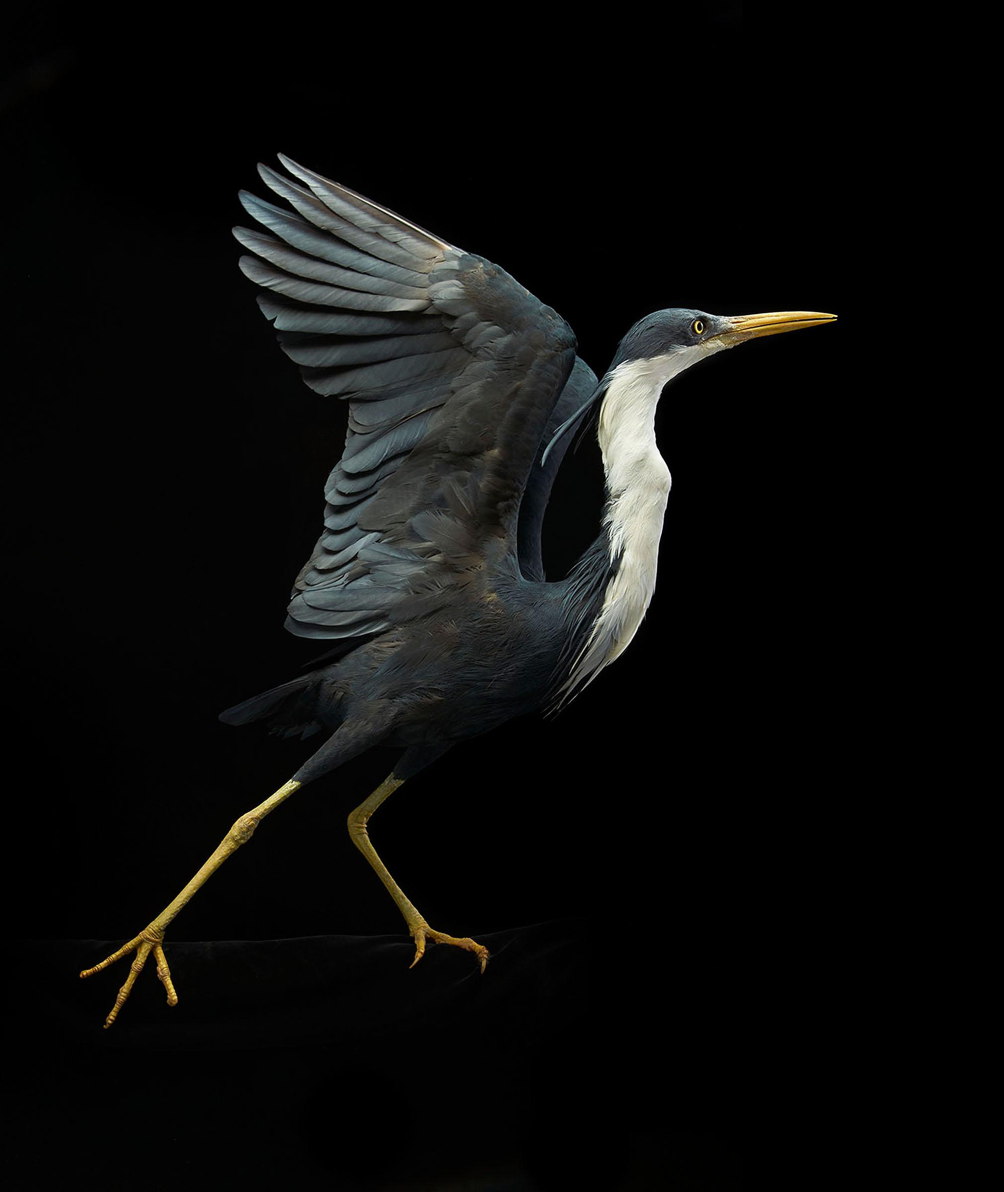Heron_014 2.jpg
