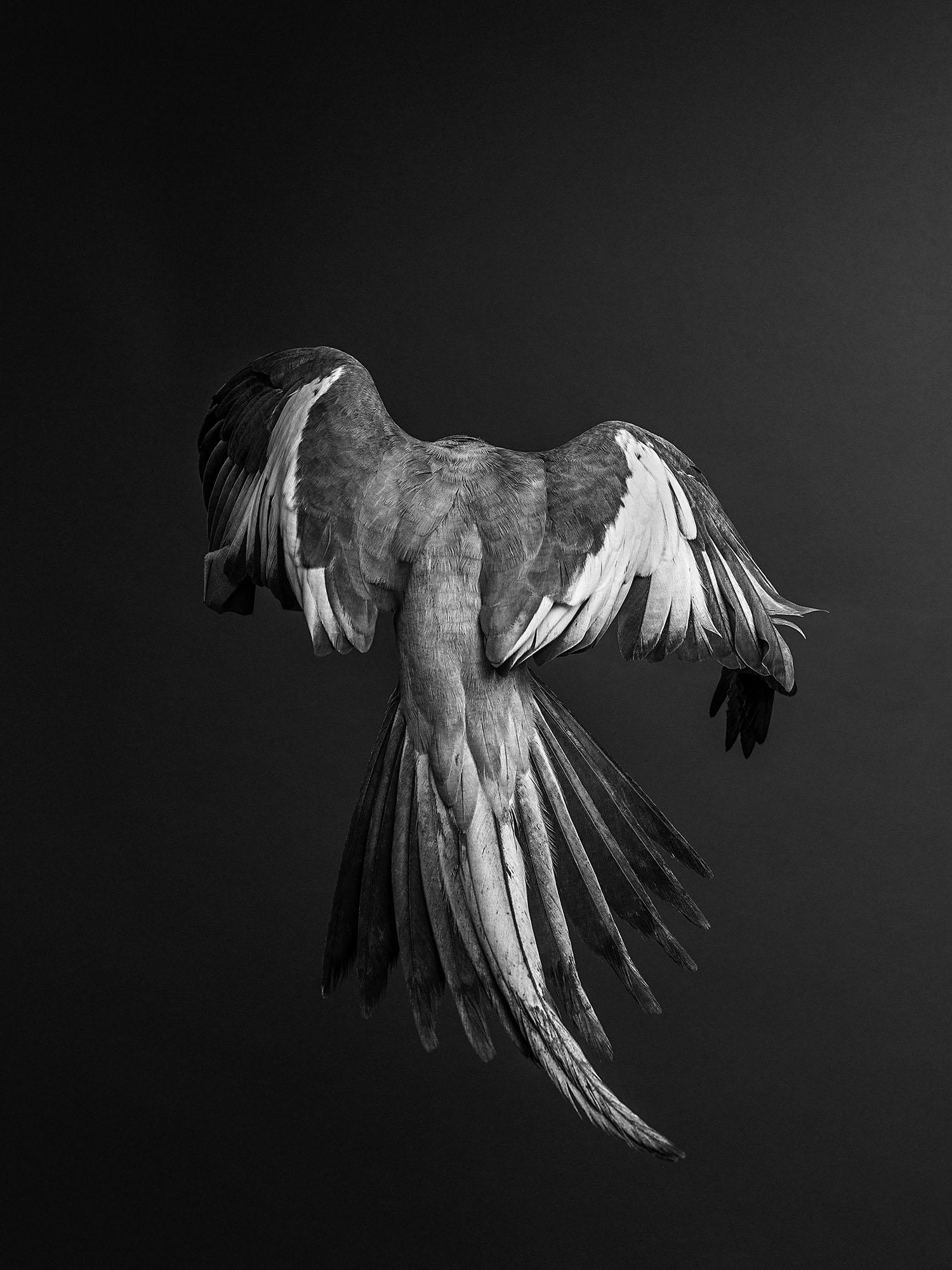 Cockatiel-Gary-Heery-Bird-Print