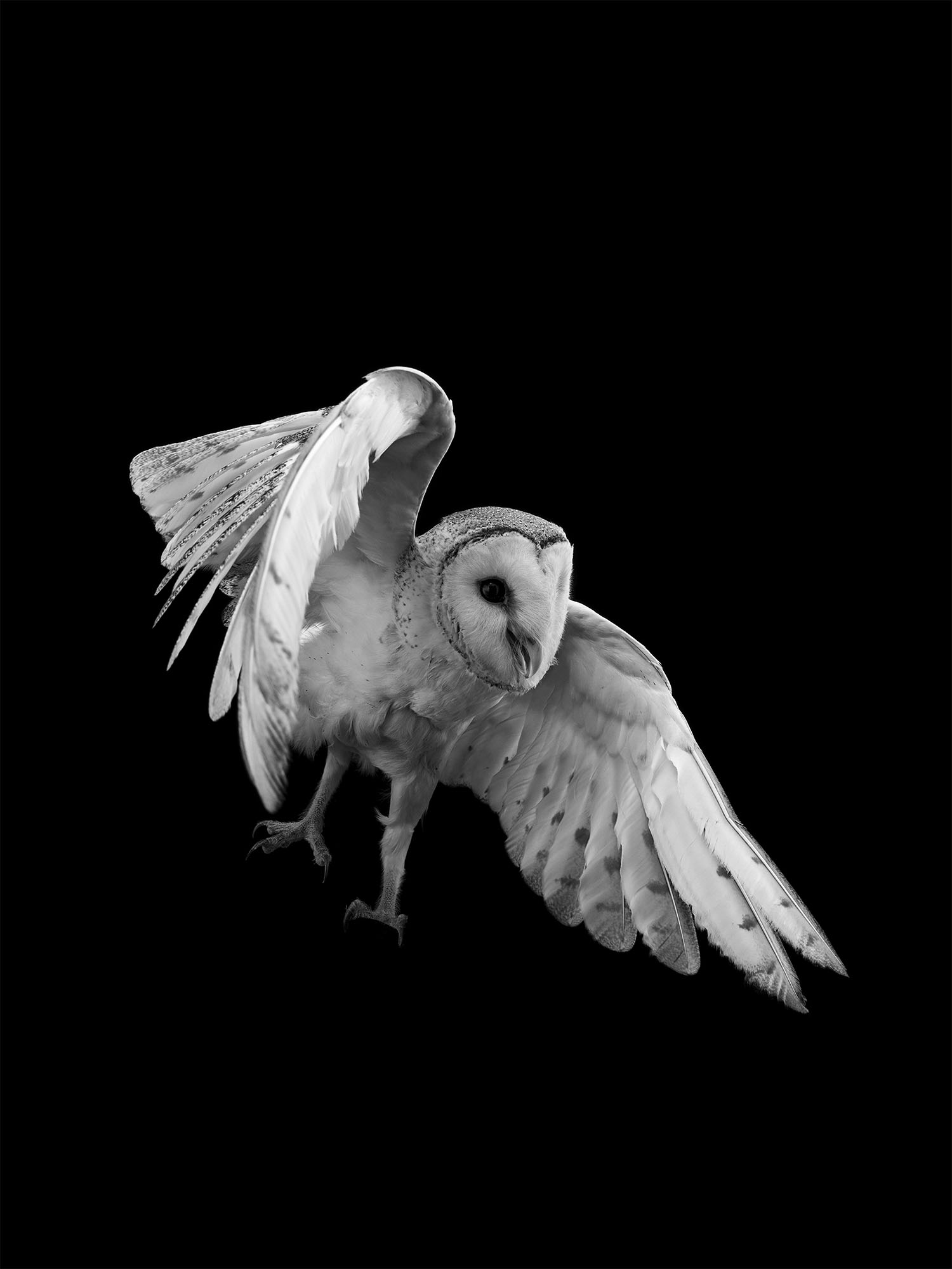 barn-owl-gary-heery-bird-print.jpg