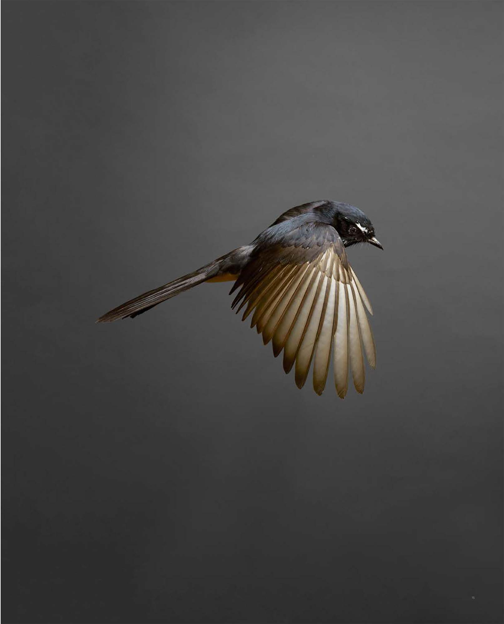 BIRD Gary Heery Book-completemmockup-17.jpg