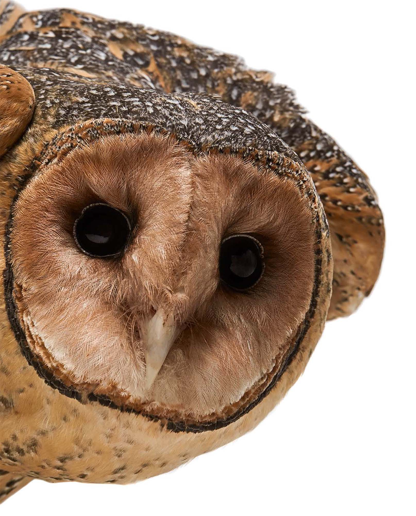 BIRD Gary Heery Book-completemmockup-22.jpg