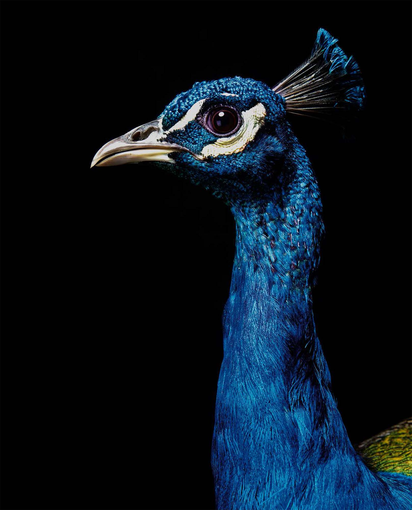 BIRD Gary Heery Book-completemmockup-25.jpg