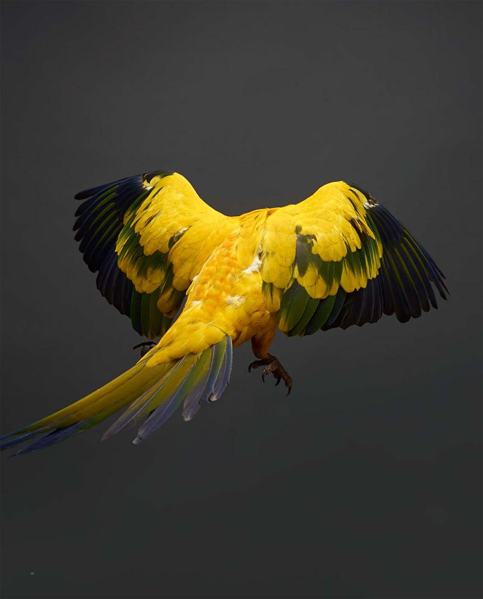 BIRD Gary Heery Book-completemmockup-30.jpg