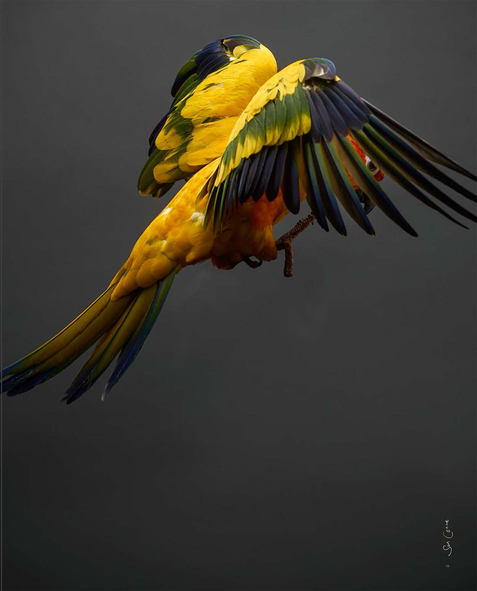 BIRD Gary Heery Book-completemmockup-31.jpg