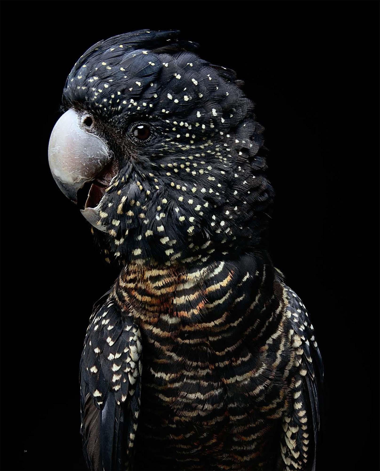 BIRD Gary Heery Book-completemmockup-36.jpg