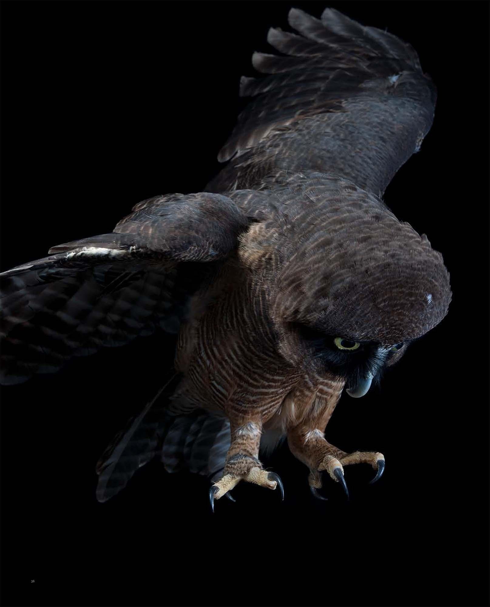 BIRD Gary Heery Book-completemmockup-38.jpg