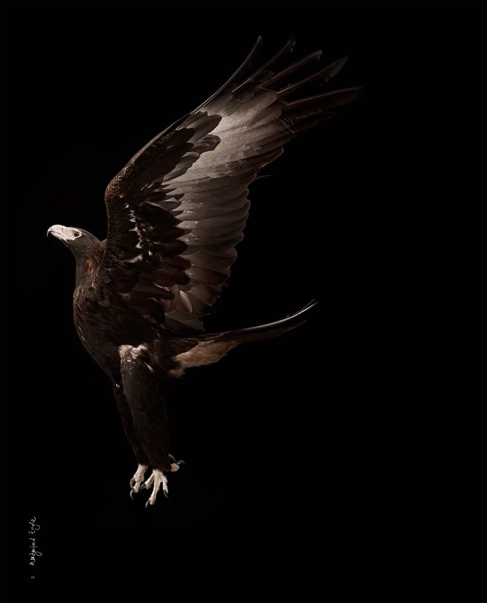BIRD Gary Heery Book-completemmockup-50.jpg