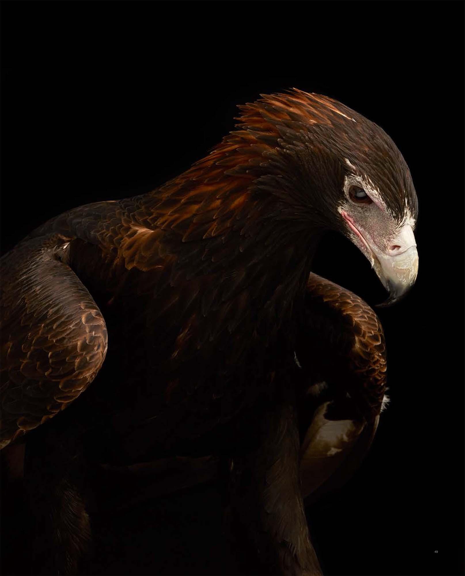 BIRD Gary Heery Book-completemmockup-51.jpg