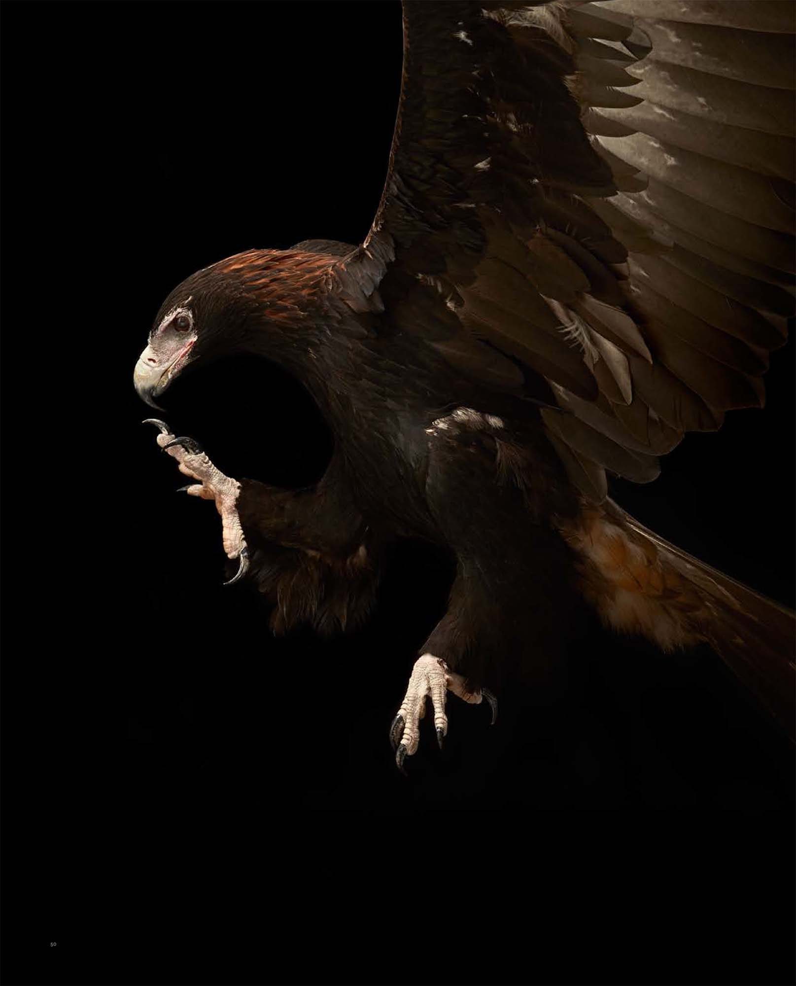 BIRD Gary Heery Book-completemmockup-52.jpg