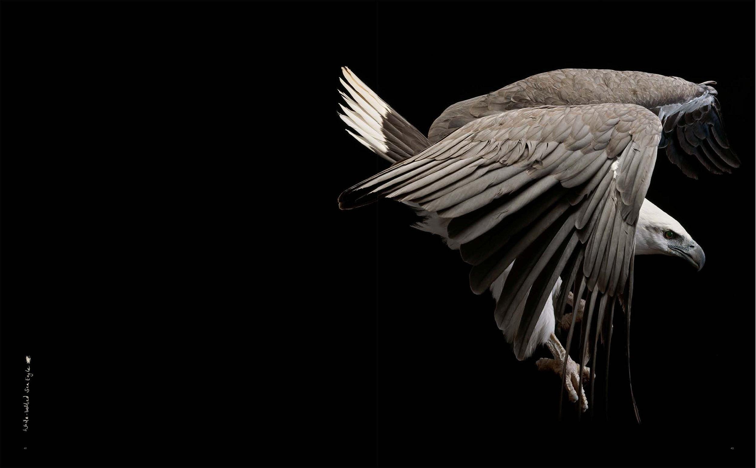 BIRD Gary Heery Book-completemmockup-45 copy.JPG