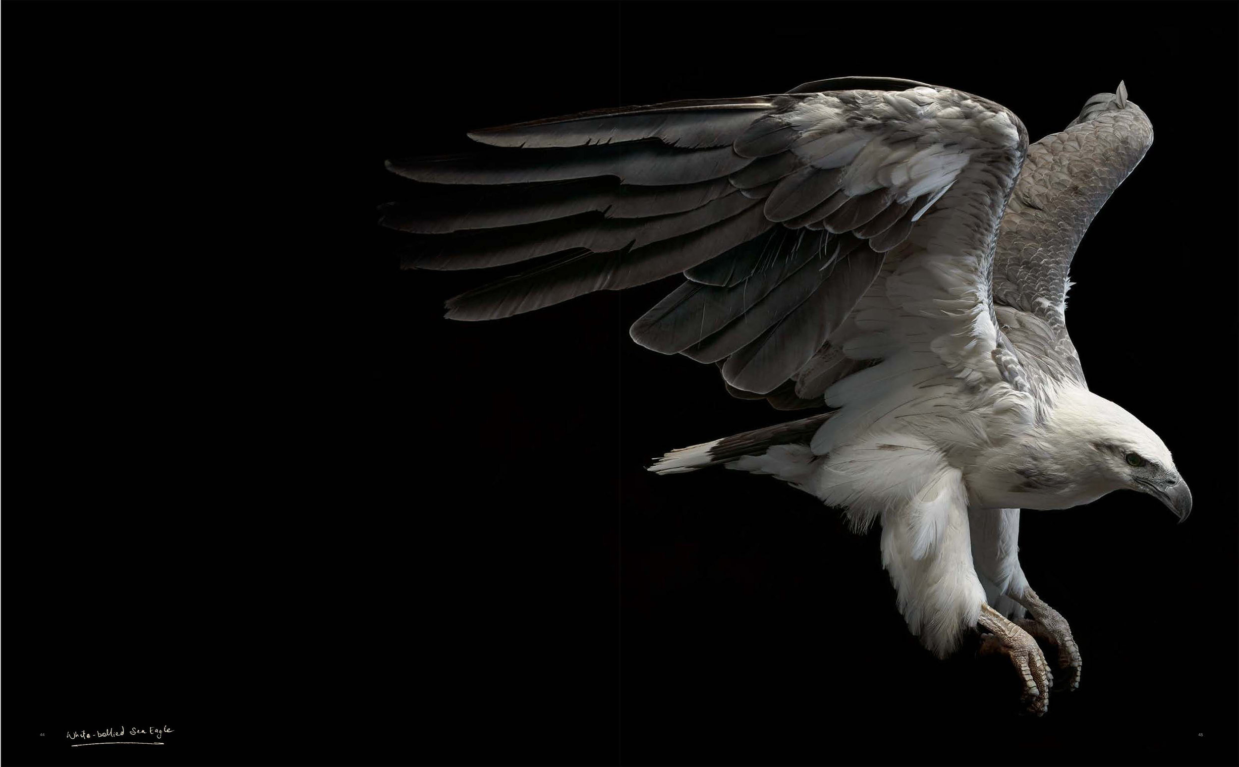 BIRD Gary Heery Book-completemmockup-47.jpg