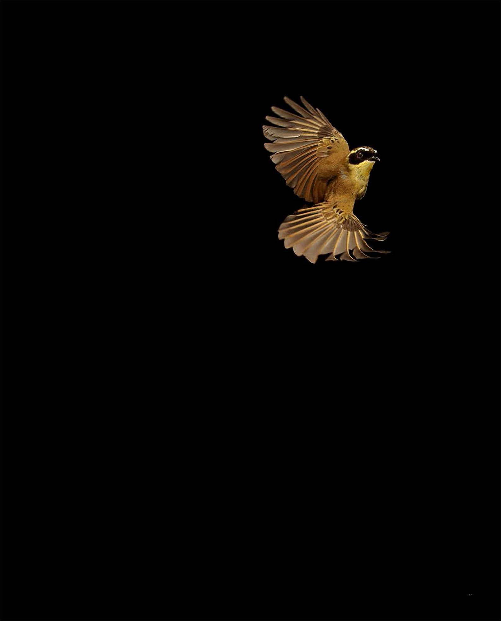 BIRD Gary Heery Book-completemmockup-59.jpg
