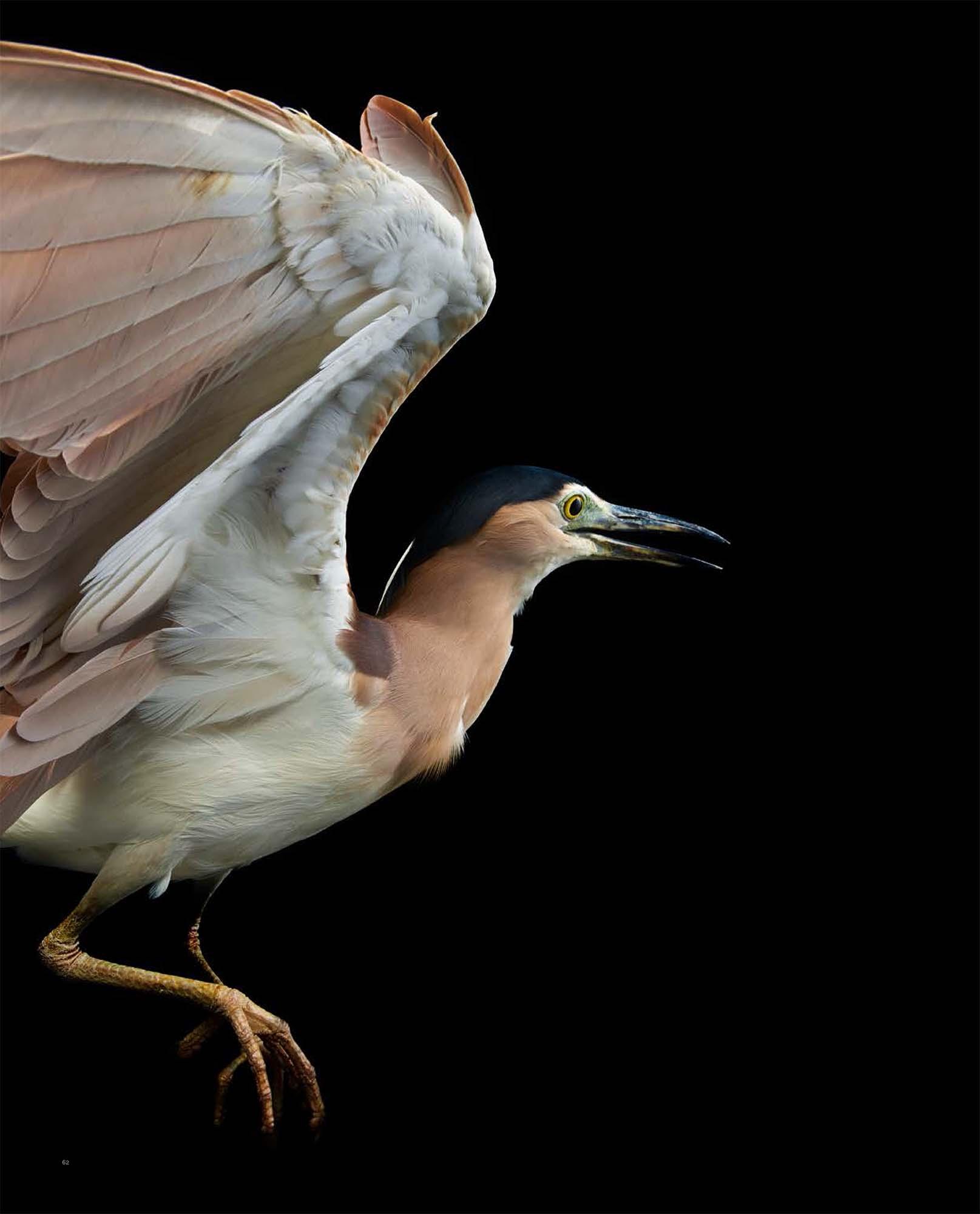 BIRD Gary Heery Book-completemmockup-64.jpg