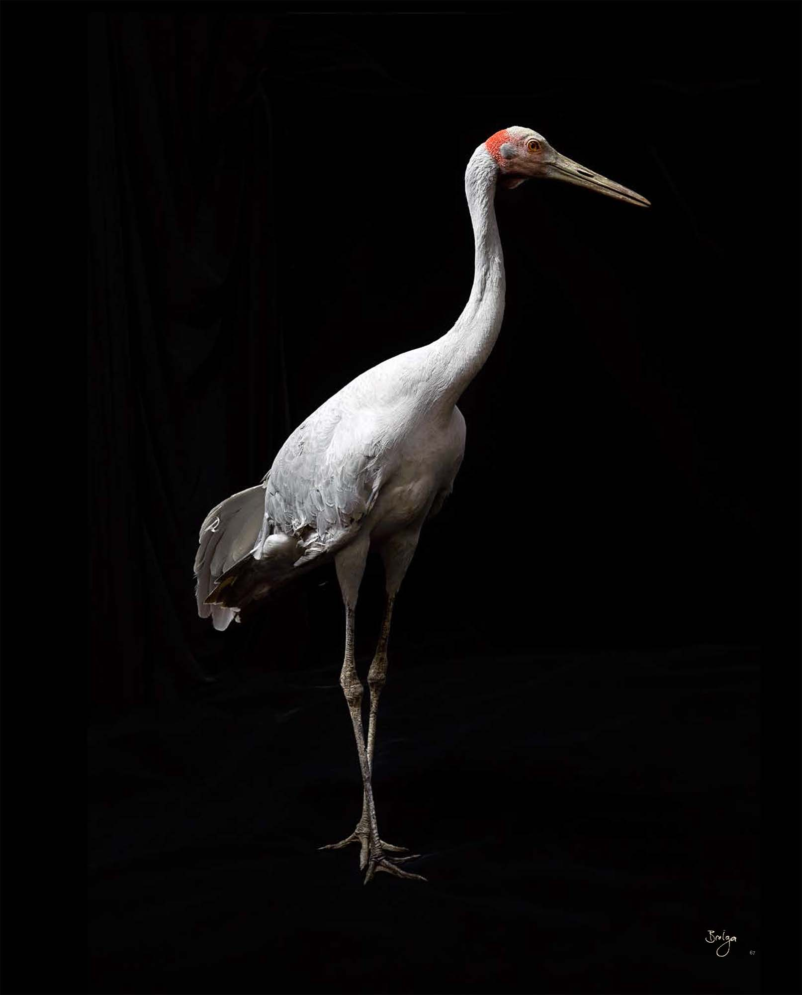 BIRD Gary Heery Book-completemmockup-69.jpg