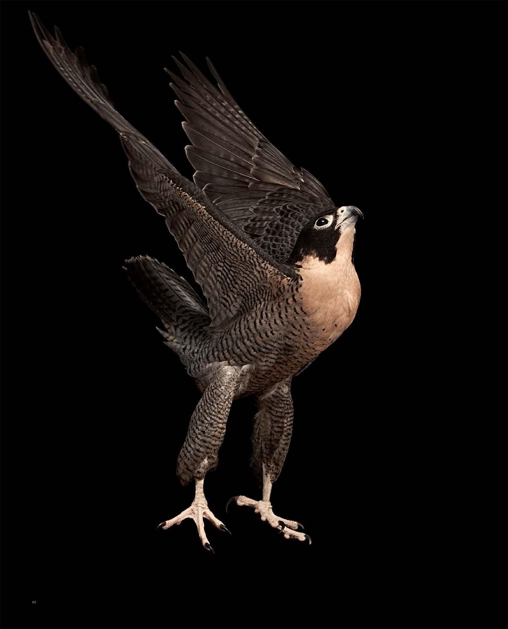 BIRD Gary Heery Book-completemmockup-70.jpg