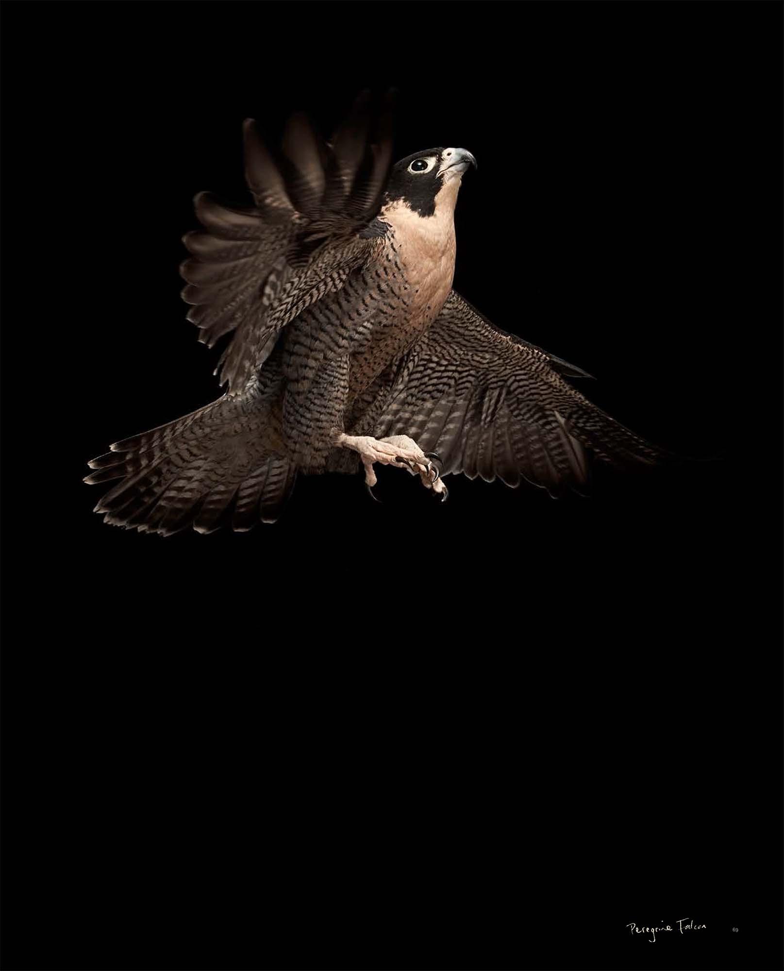 BIRD Gary Heery Book-completemmockup-71.jpg