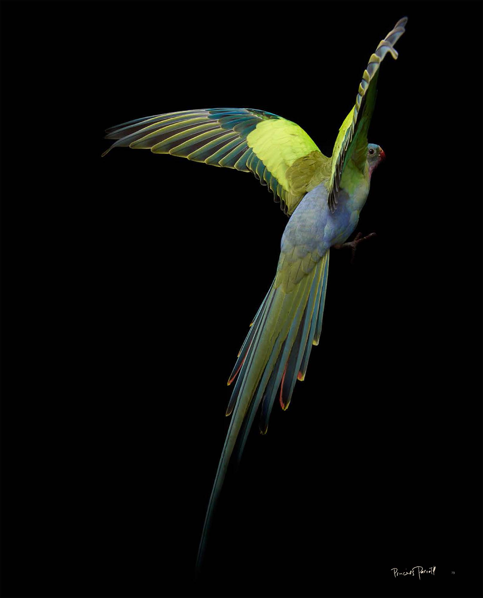 BIRD Gary Heery Book-completemmockup-81.jpg