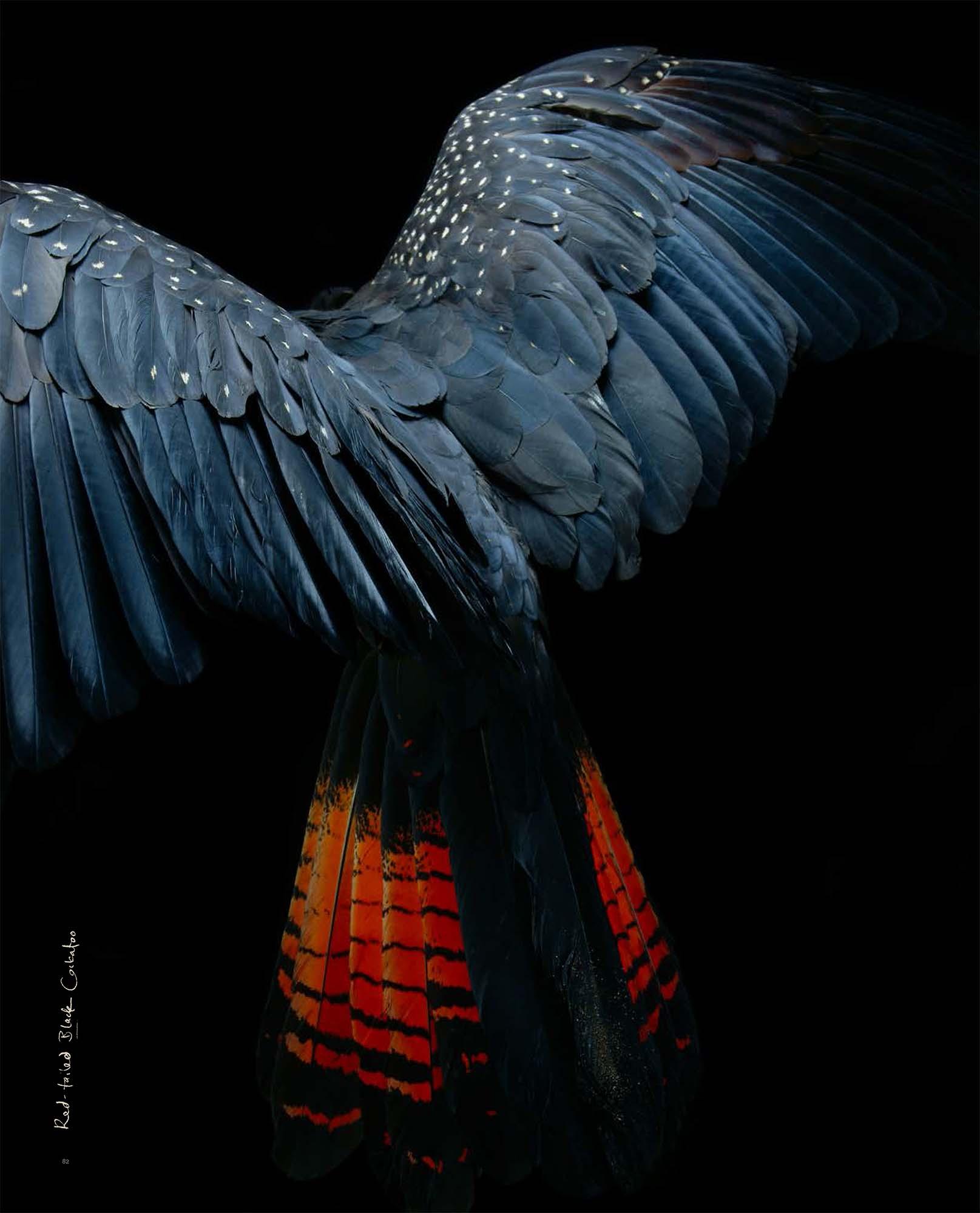 BIRD Gary Heery Book-completemmockup-84.jpg