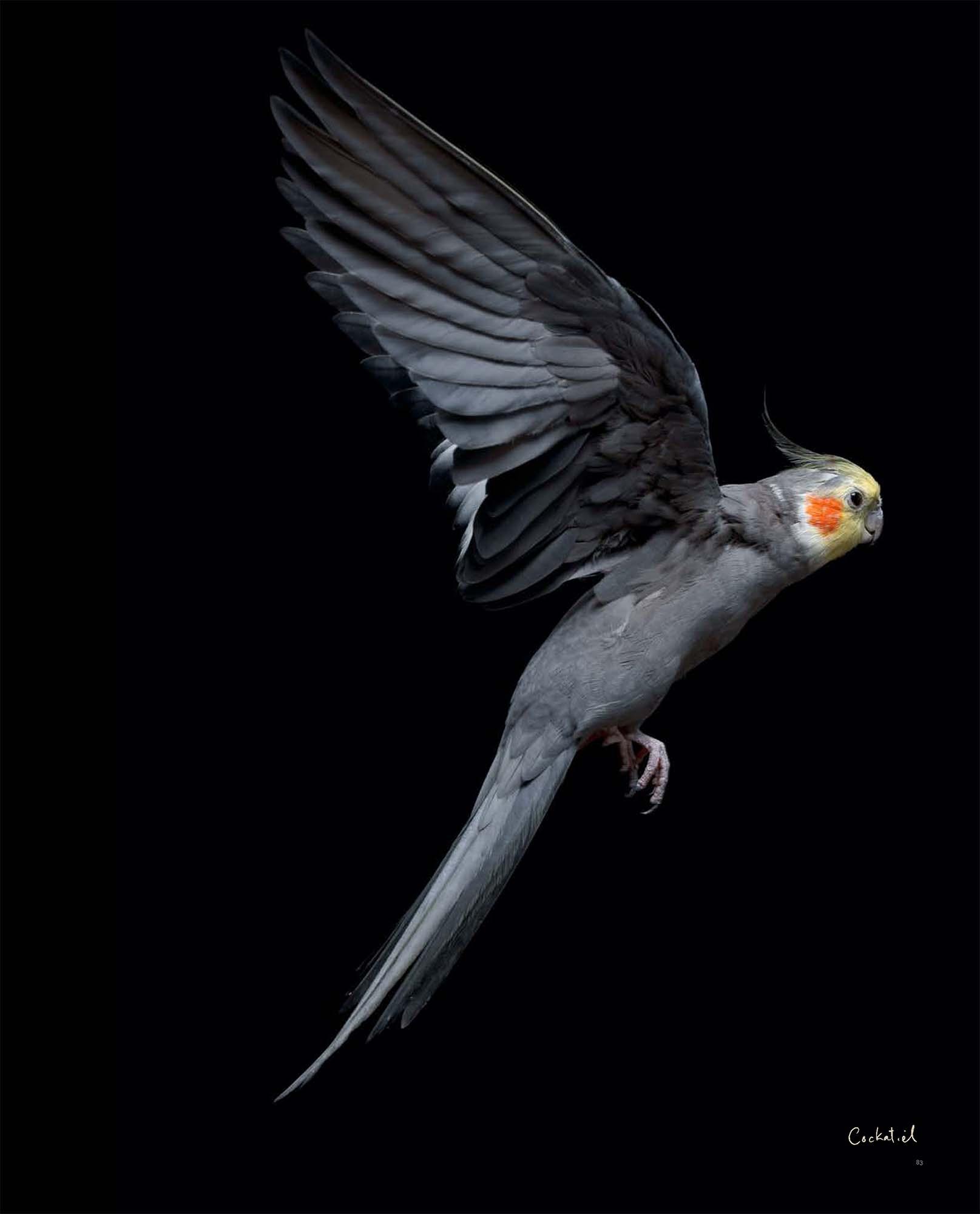 BIRD Gary Heery Book-completemmockup-85.jpg