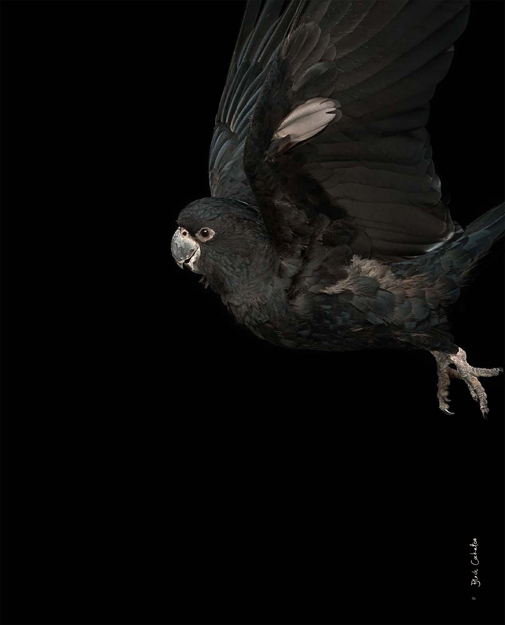 BIRD Gary Heery Book-completemmockup-87.jpg