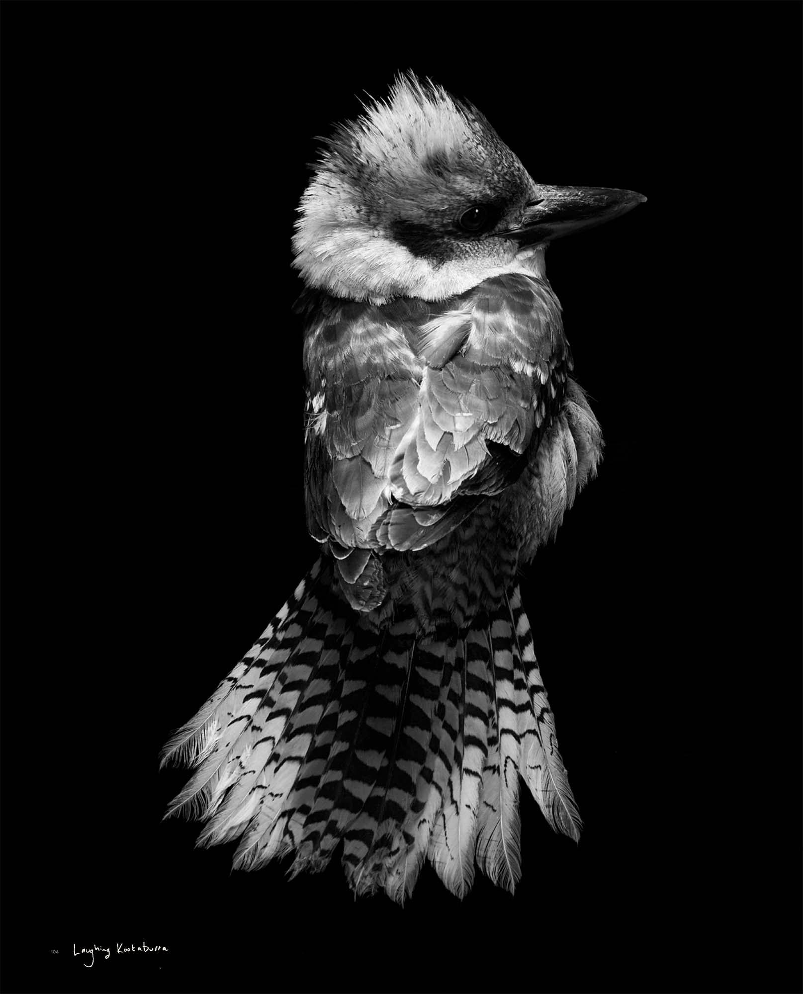 BIRD Gary Heery Book-completemmockup-106.jpg
