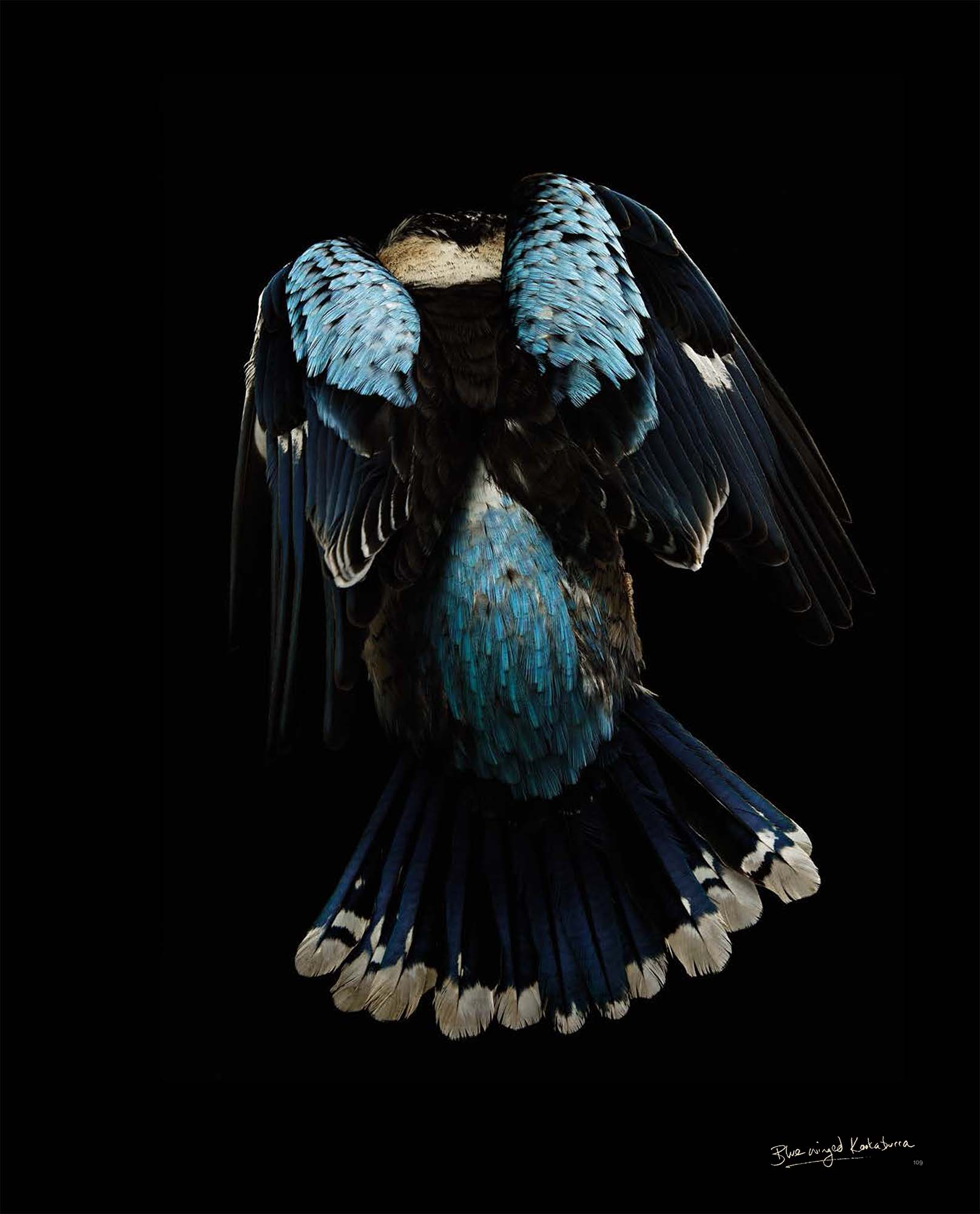 BIRD Gary Heery Book-completemmockup-111.jpg