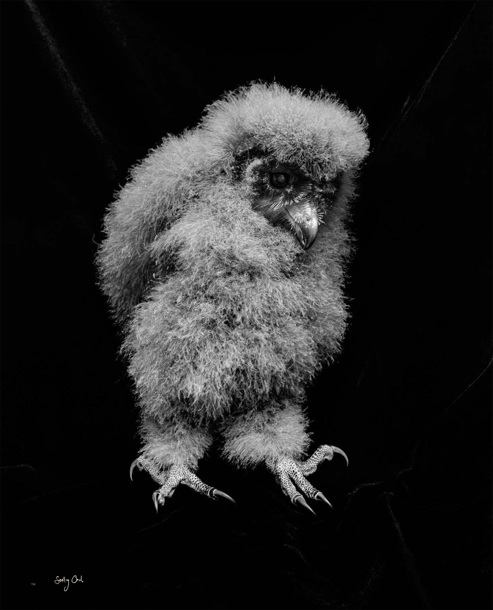 BIRD Gary Heery Book-completemmockup-116.jpg