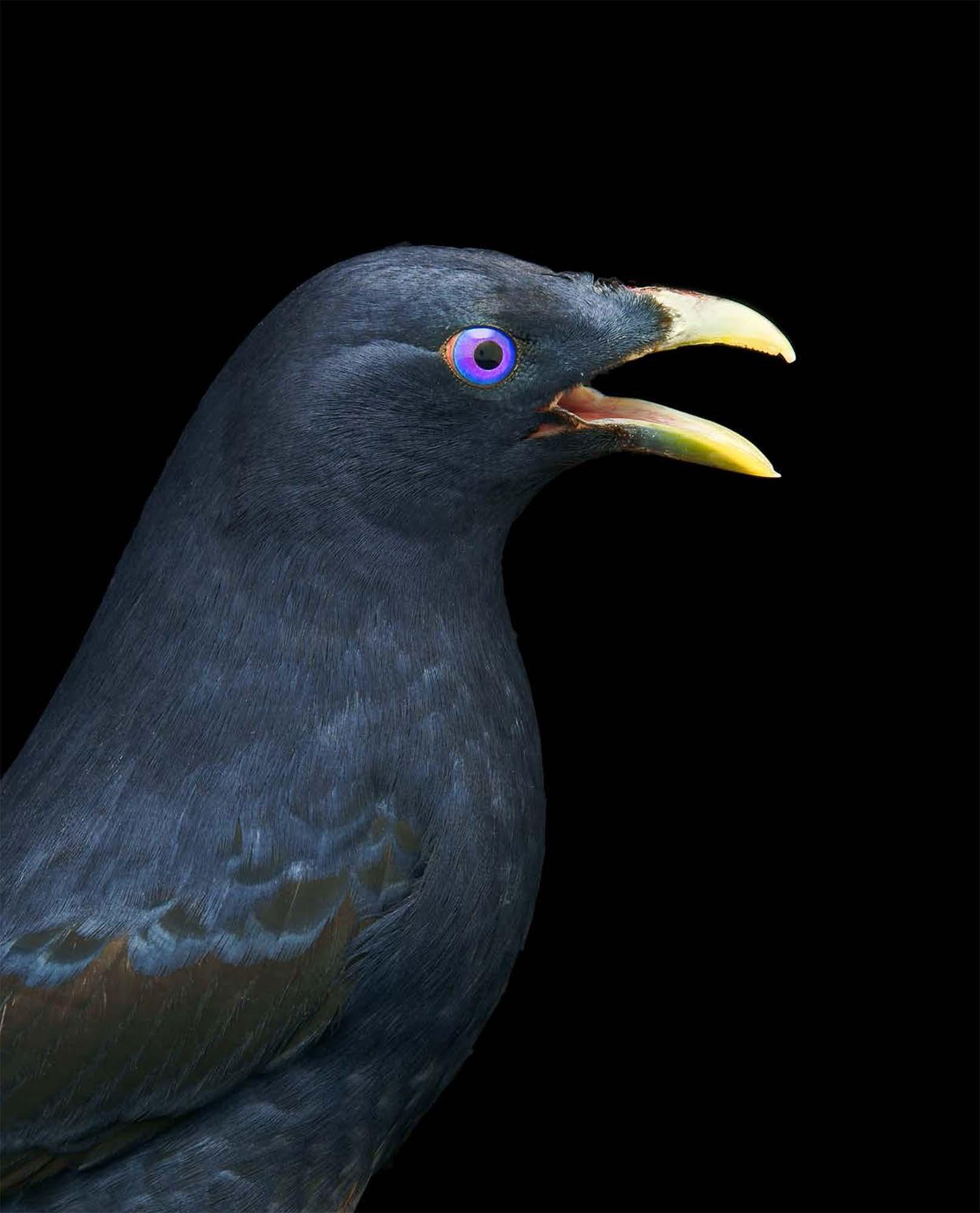 BIRD Gary Heery Book-completemmockup-118.jpg