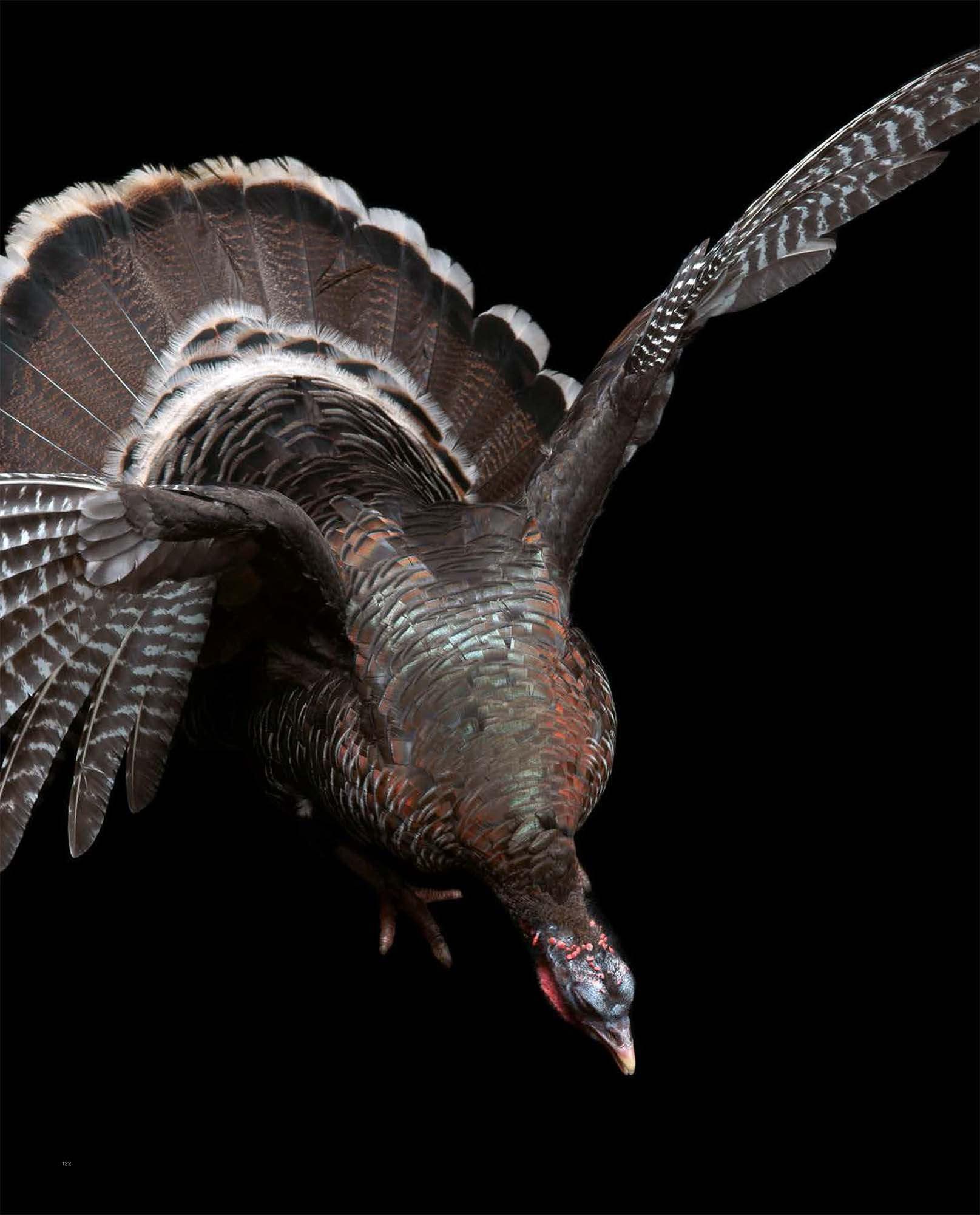 BIRD Gary Heery Book-completemmockup-124.jpg