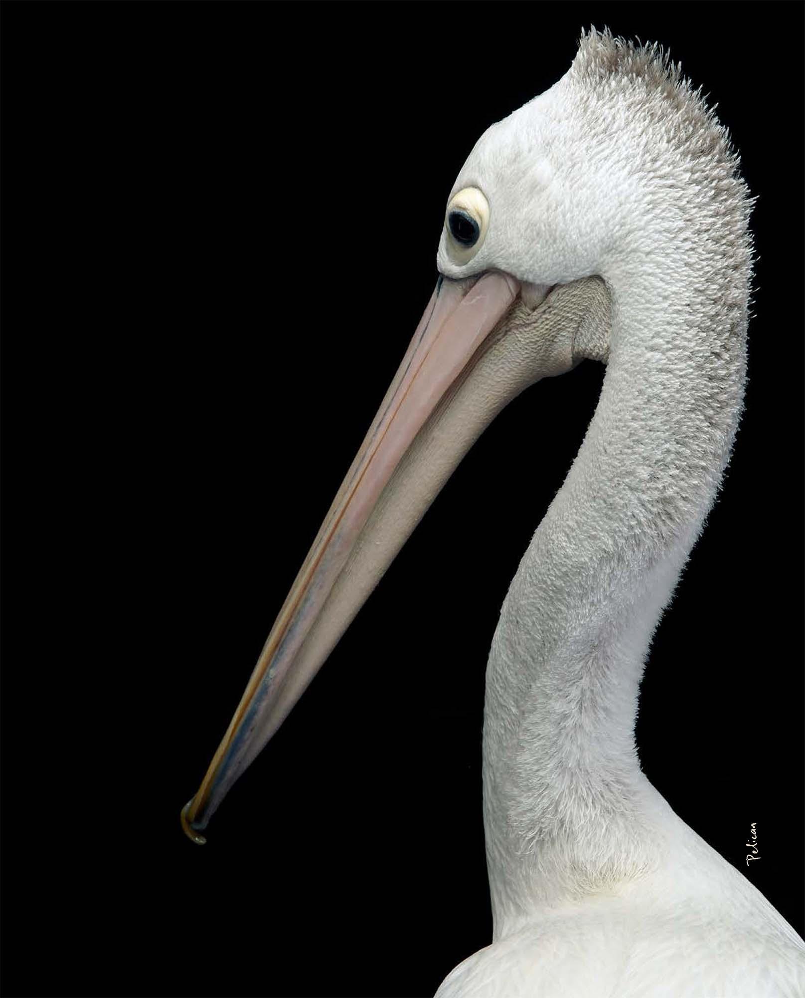 BIRD Gary Heery Book-completemmockup-129.jpg
