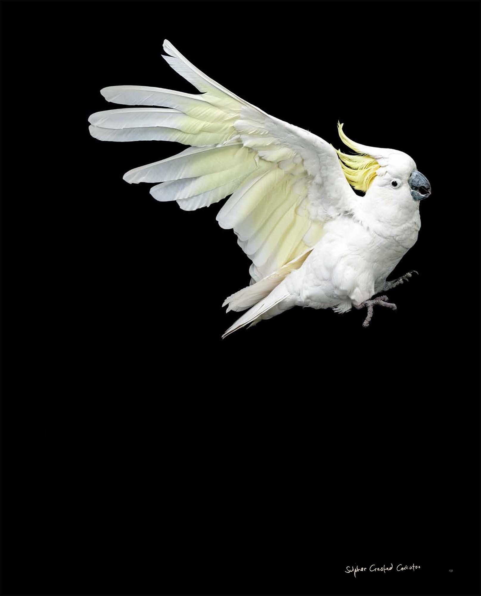 BIRD Gary Heery Book-completemmockup-133.jpg