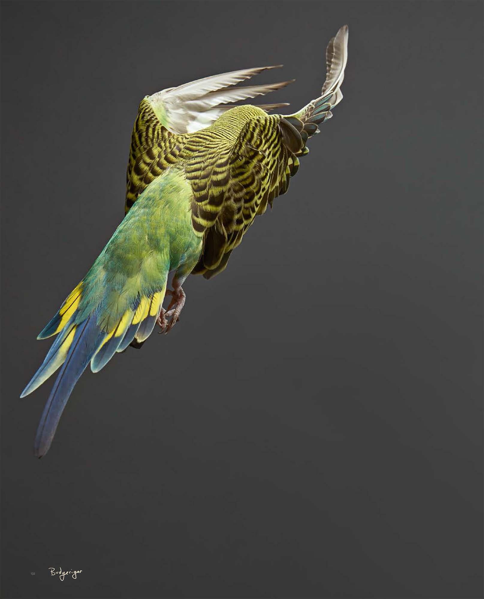 BIRD Gary Heery Book-completemmockup-134.jpg