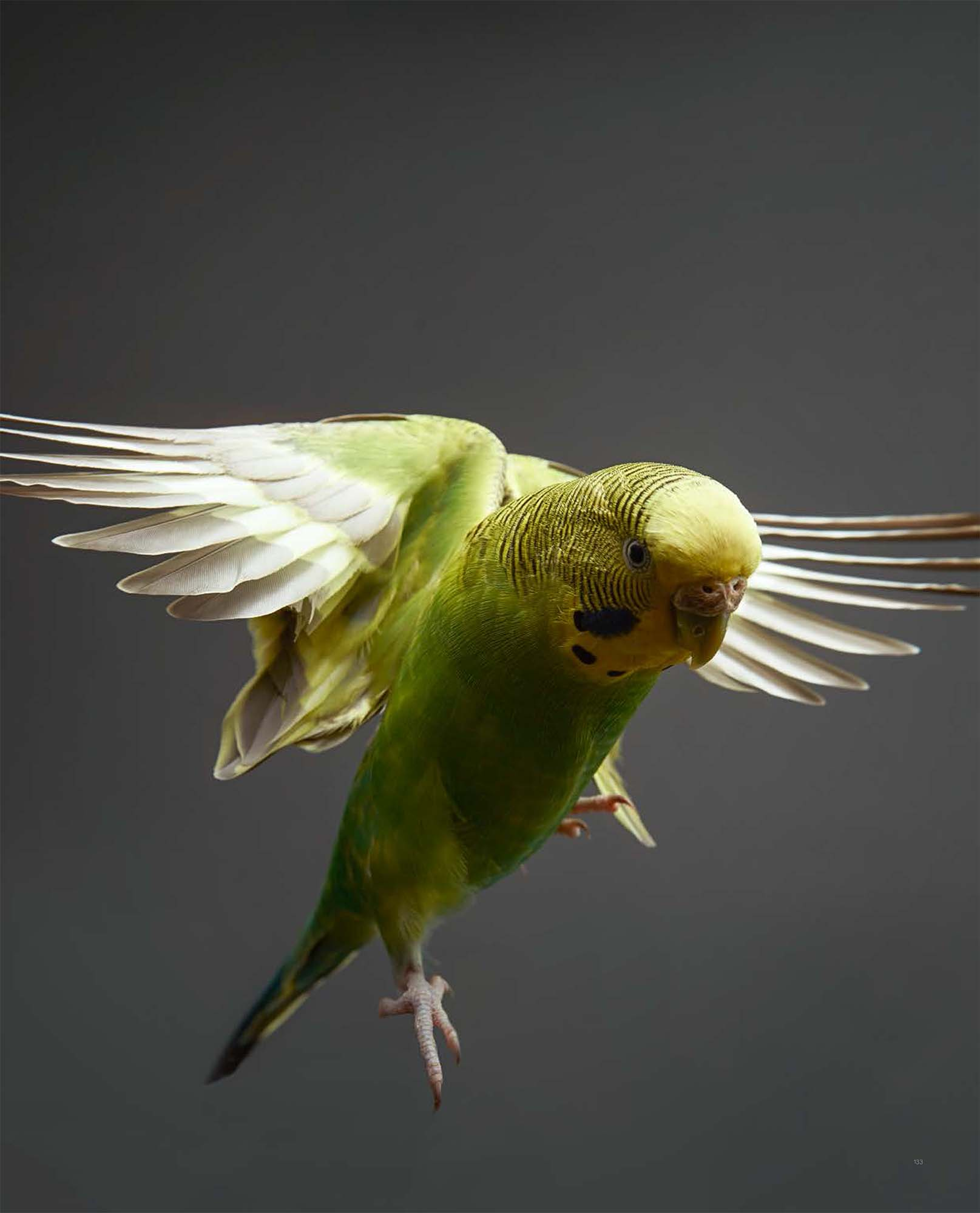 BIRD Gary Heery Book-completemmockup-135.jpg