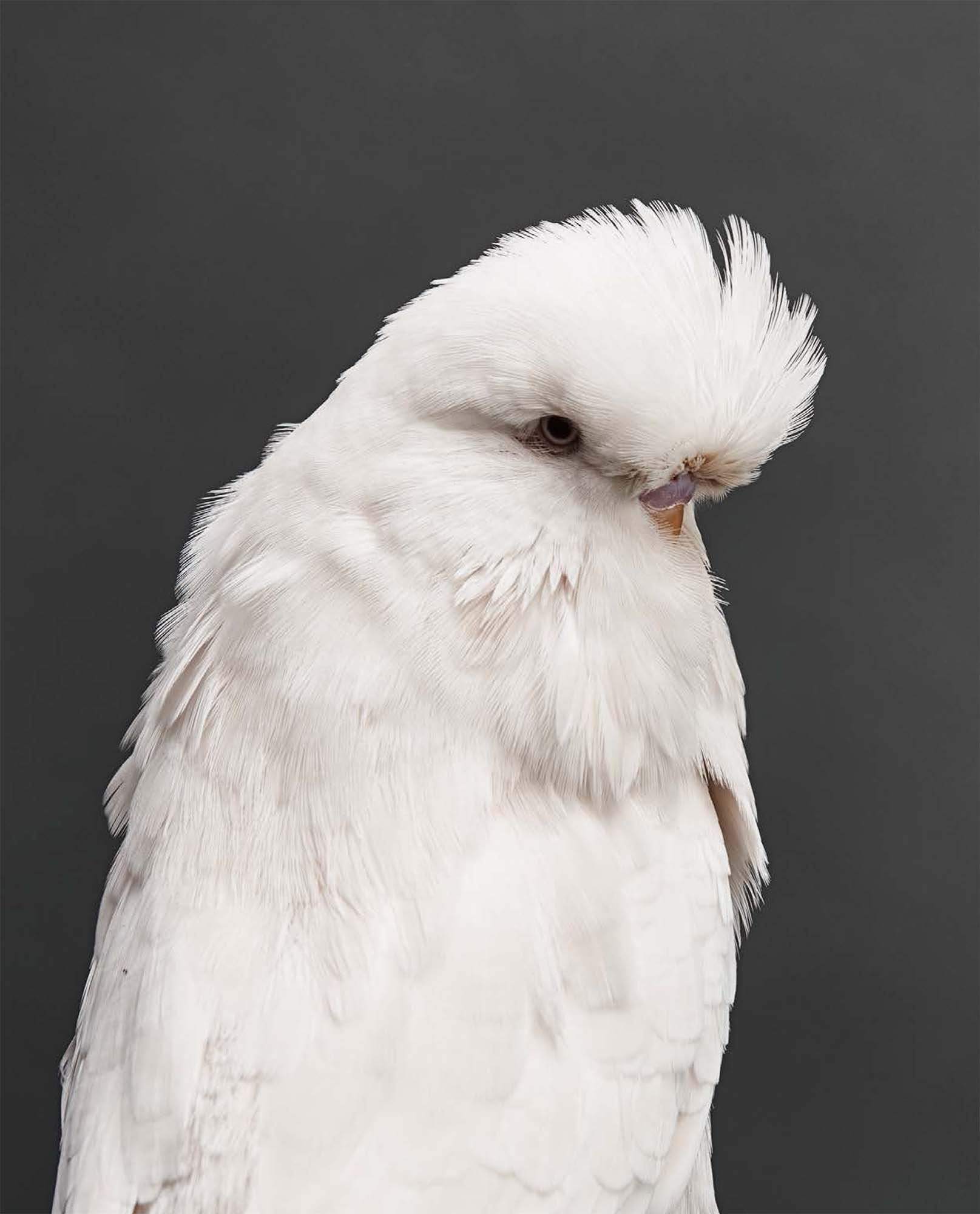 BIRD Gary Heery Book-completemmockup-136.jpg