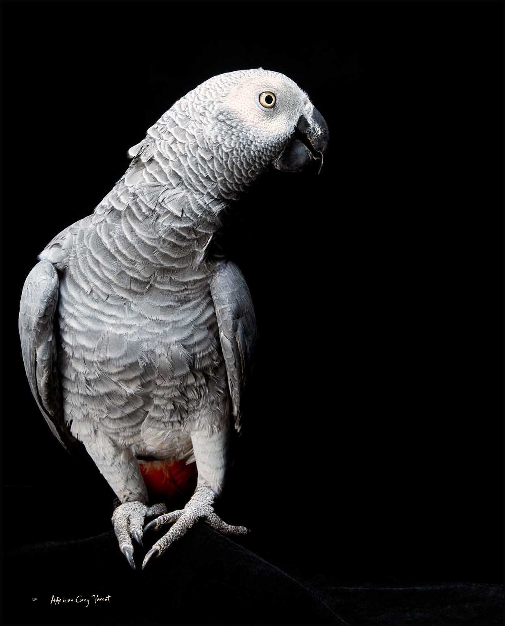 BIRD Gary Heery Book-completemmockup-138.jpg