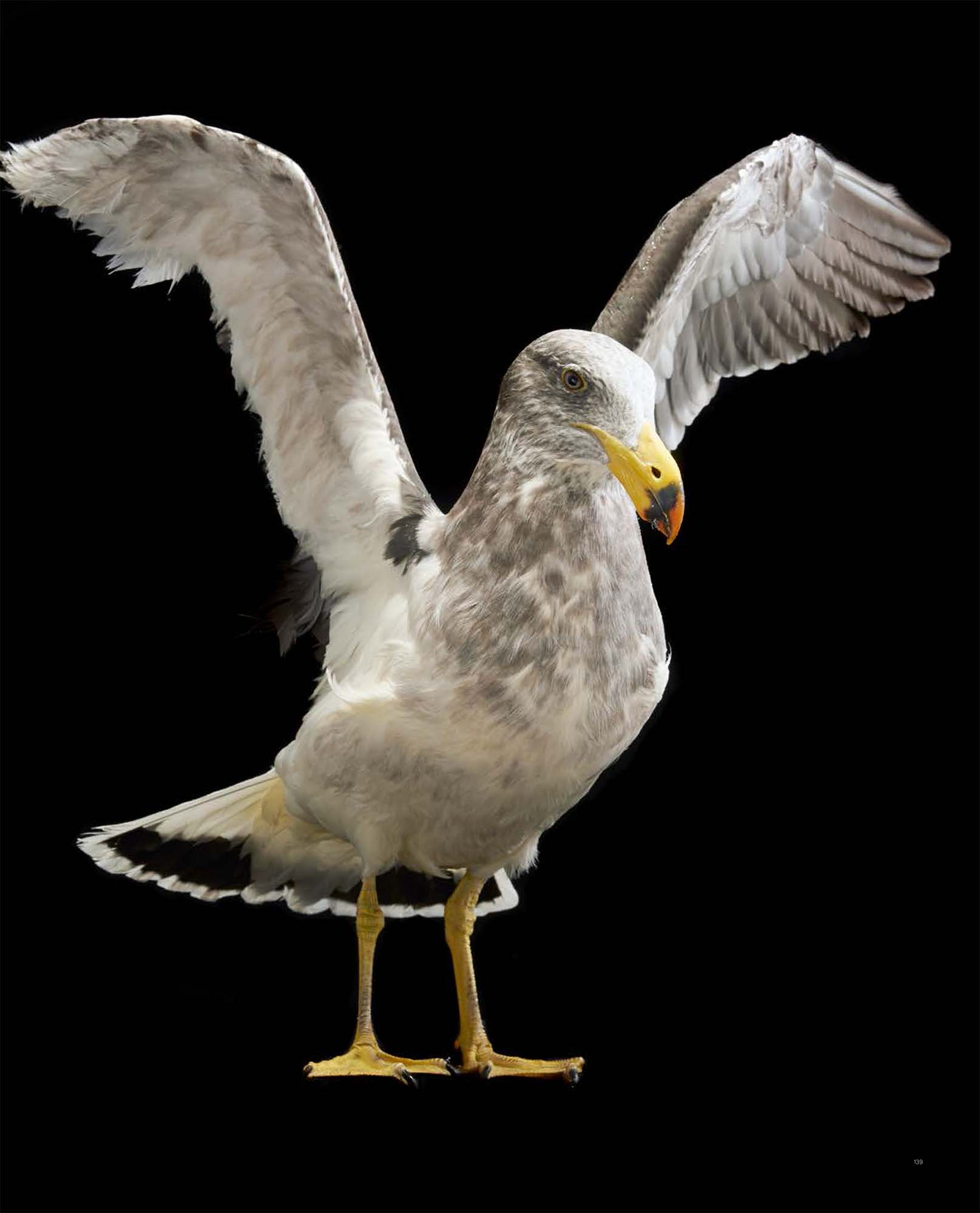 BIRD Gary Heery Book-completemmockup-141.jpg