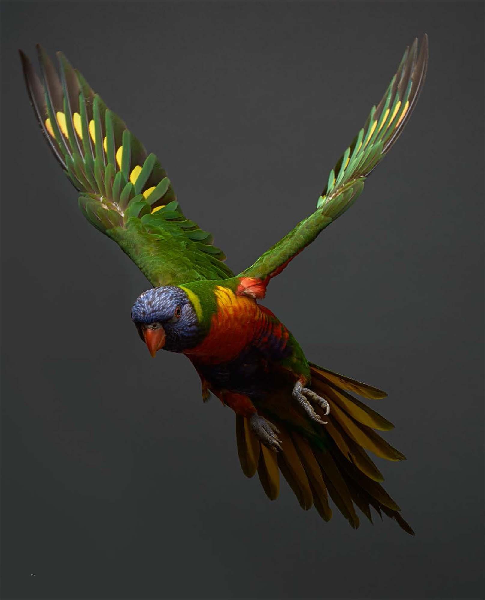 BIRD Gary Heery Book-completemmockup-142.jpg