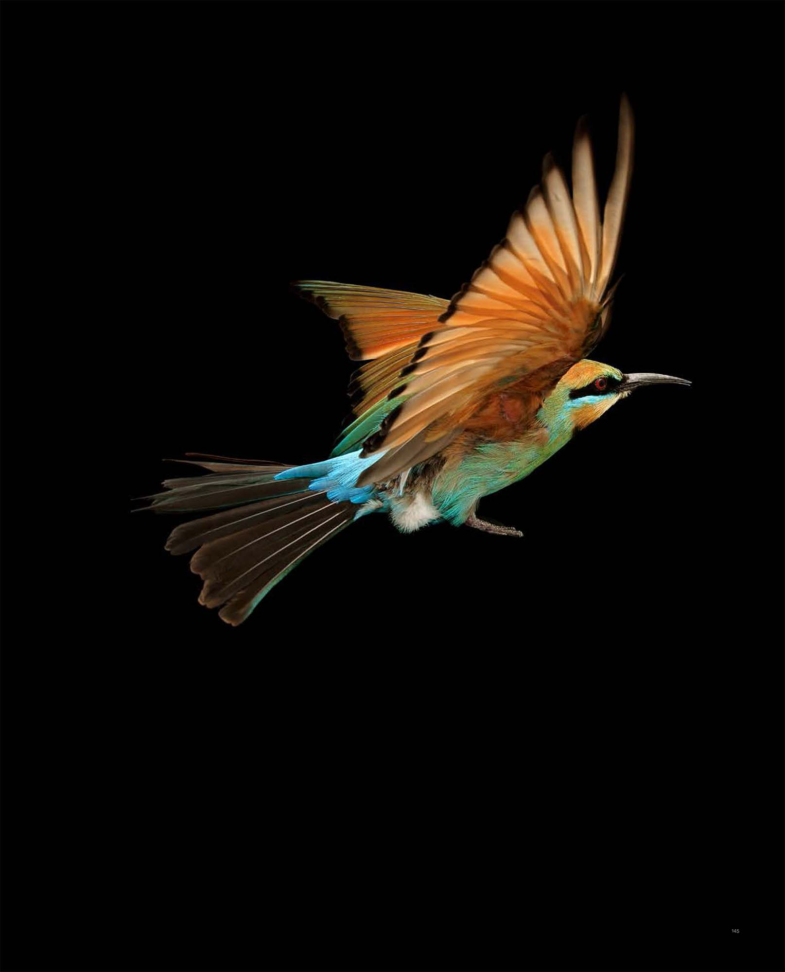 BIRD Gary Heery Book-completemmockup-147.jpg