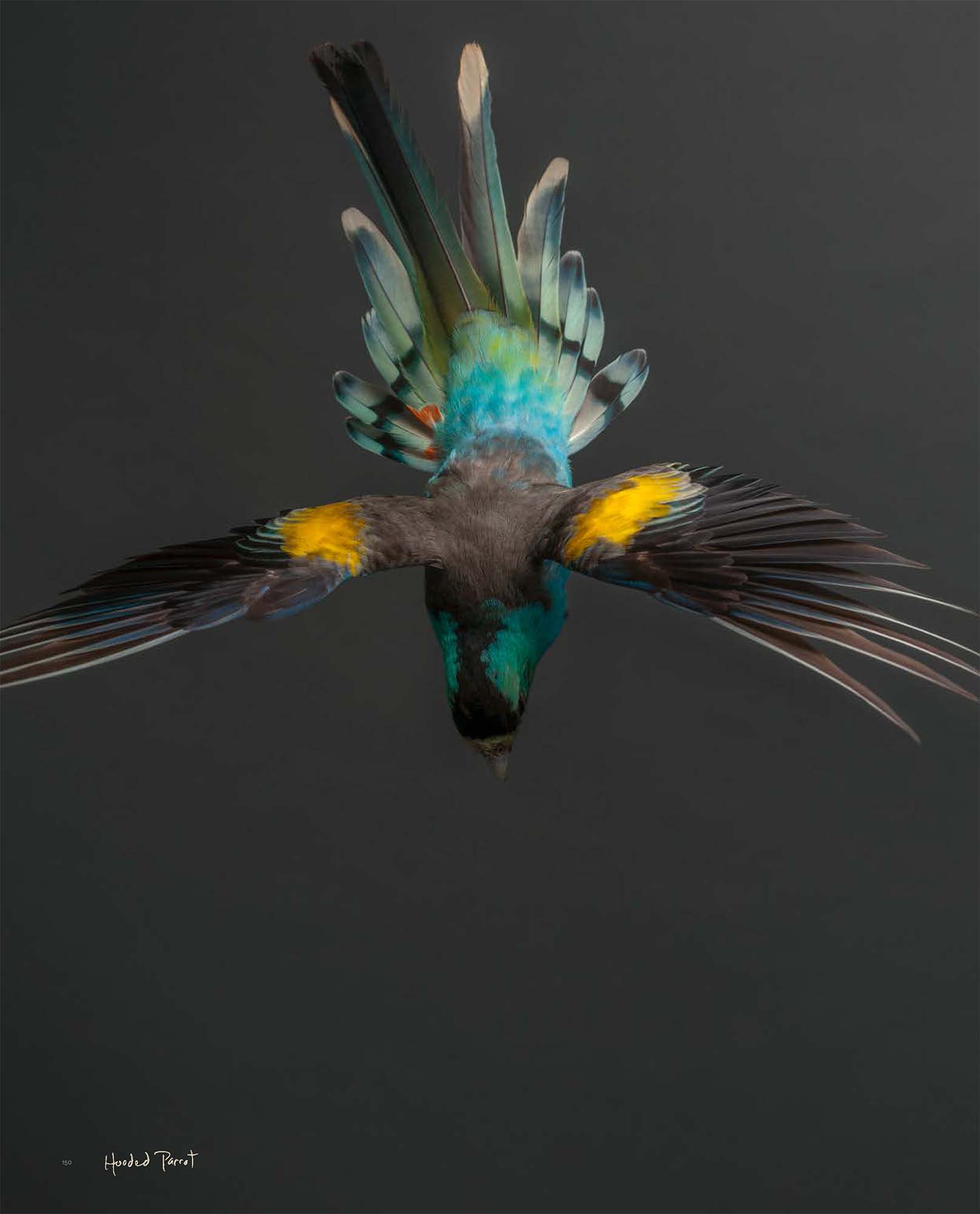 BIRD Gary Heery Book-completemmockup-152.jpg