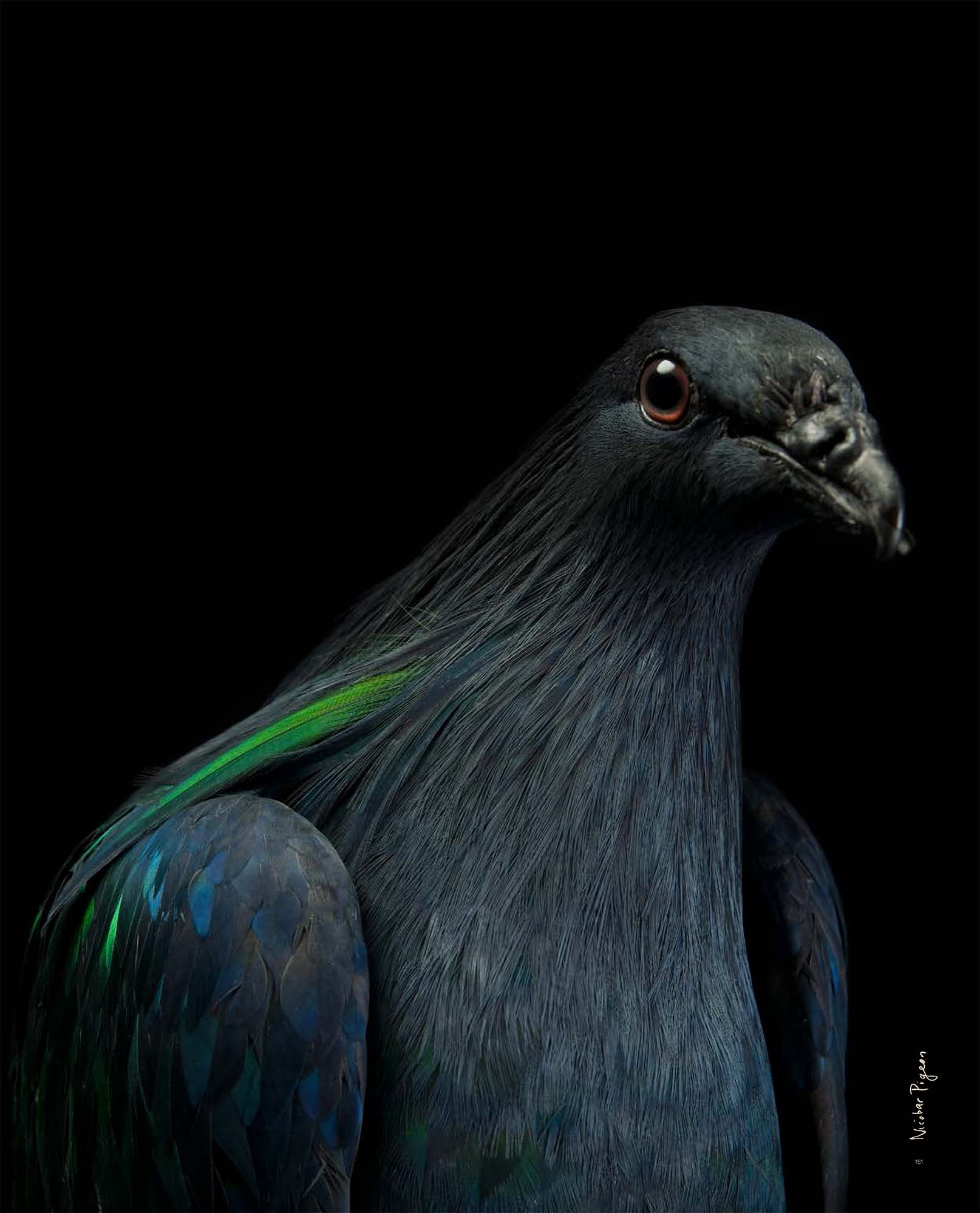 BIRD Gary Heery Book-completemmockup-153.jpg