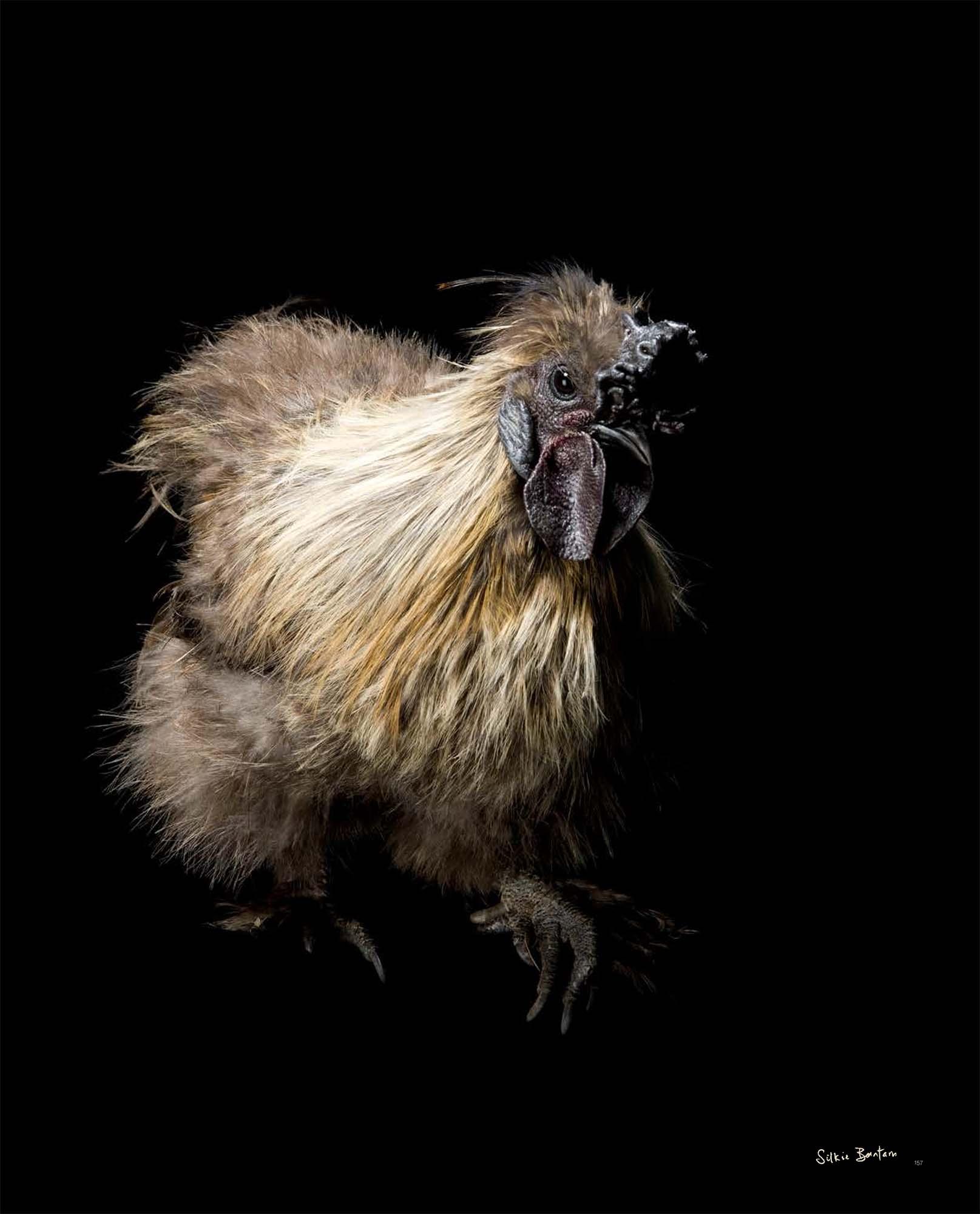 BIRD Gary Heery Book-completemmockup-159.jpg