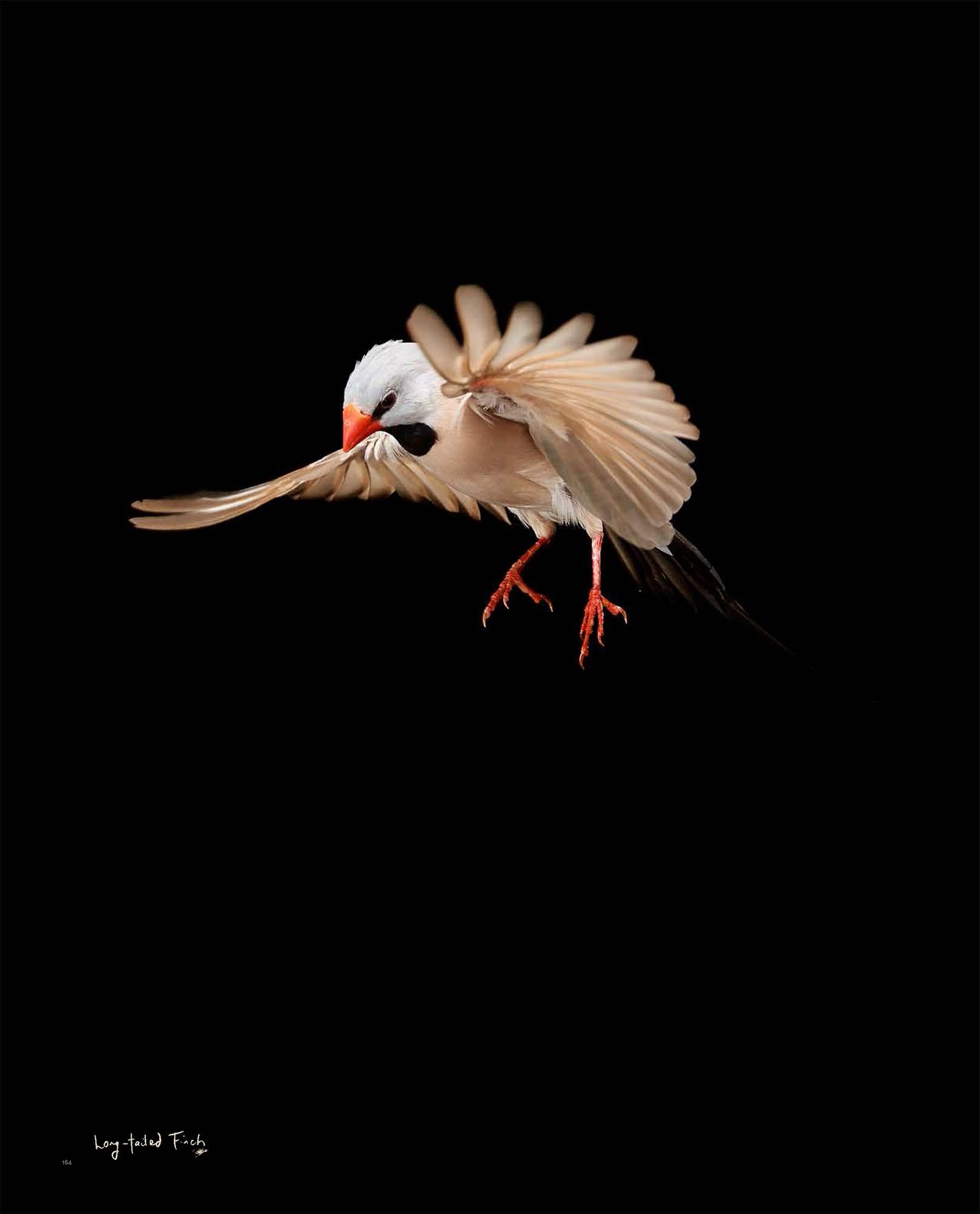 BIRD Gary Heery Book-completemmockup-166.jpg