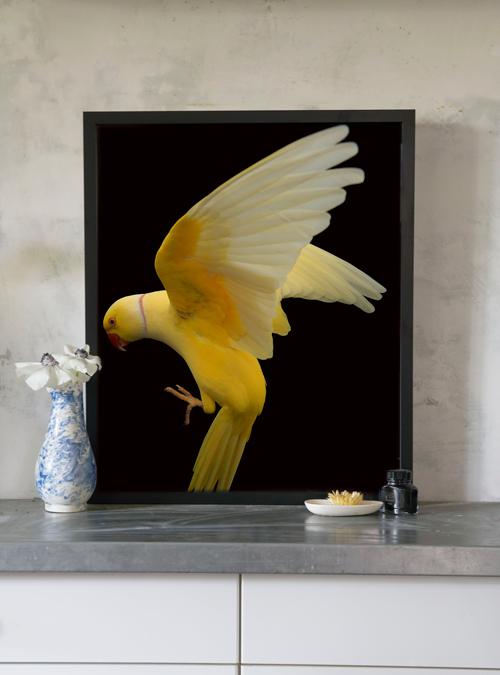 Gary_Heery_yellow_parrot_20x24_insitu.jpg