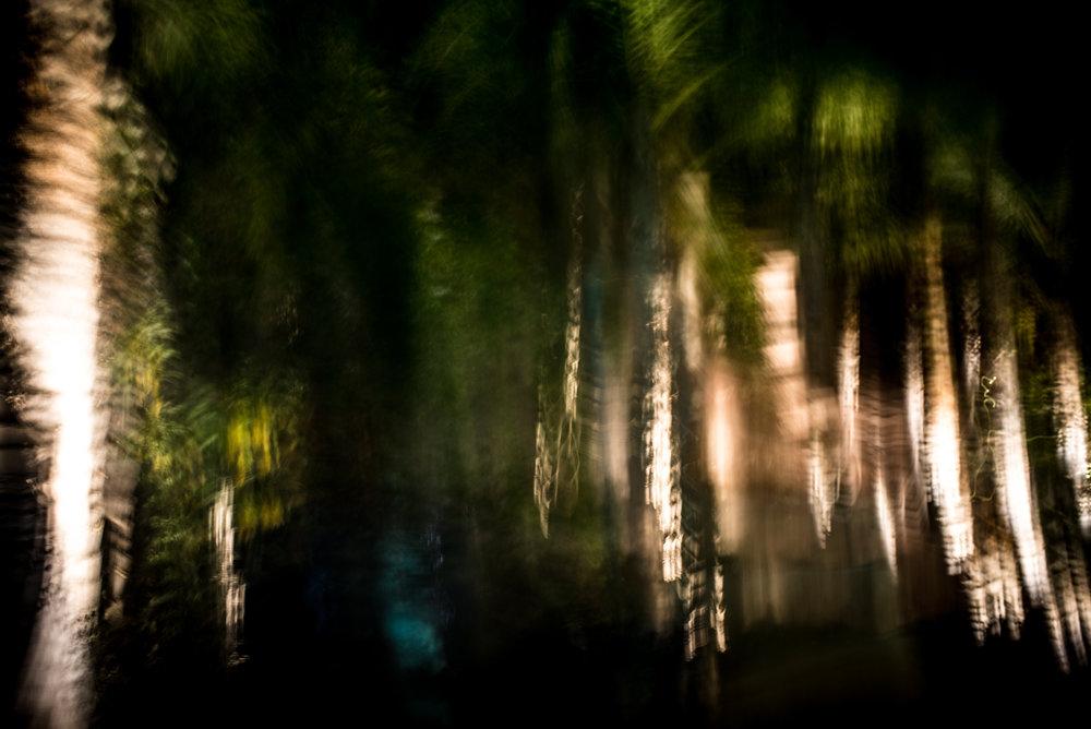 night palms.jpg