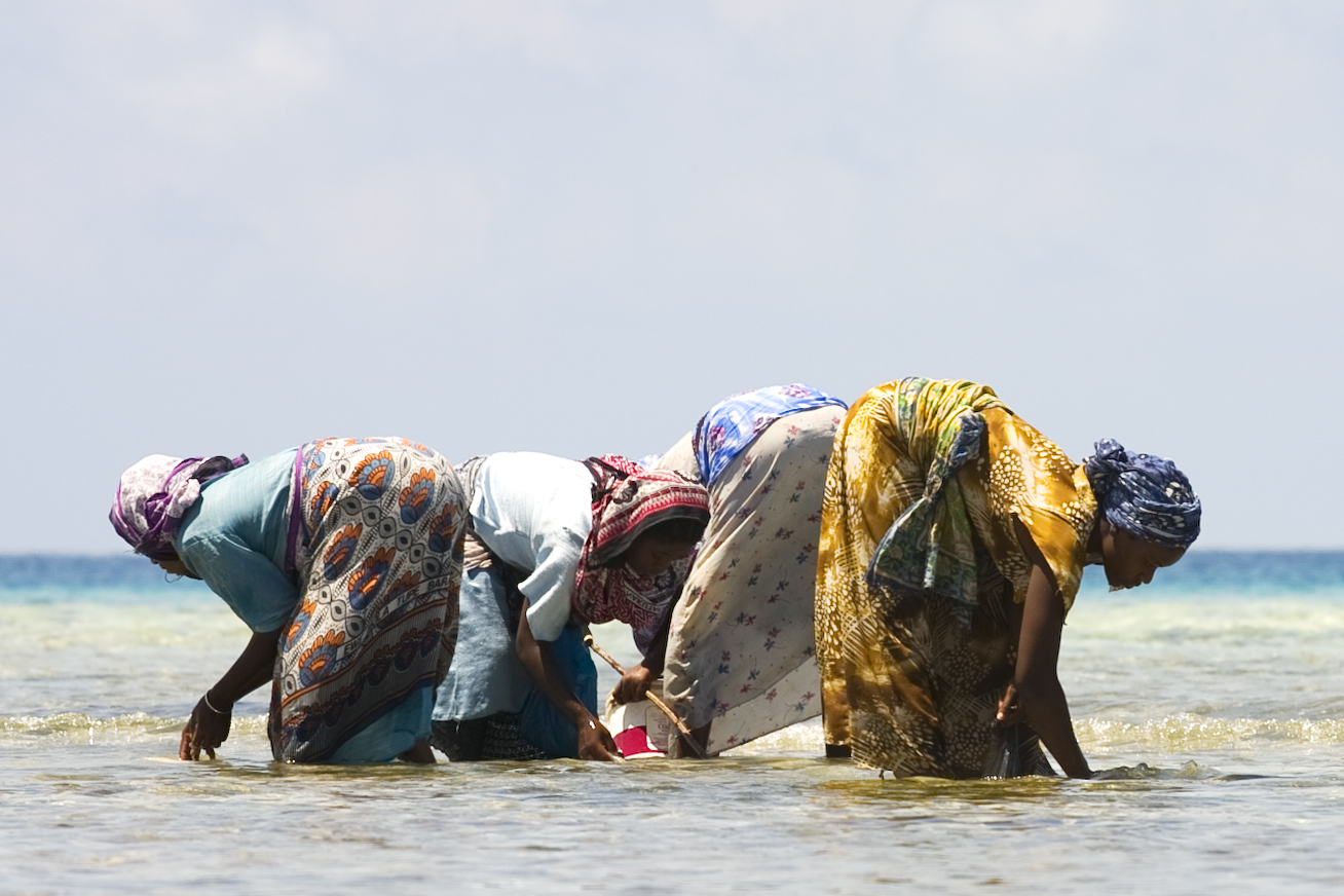 Fishing Women of Zanzibar.jpg