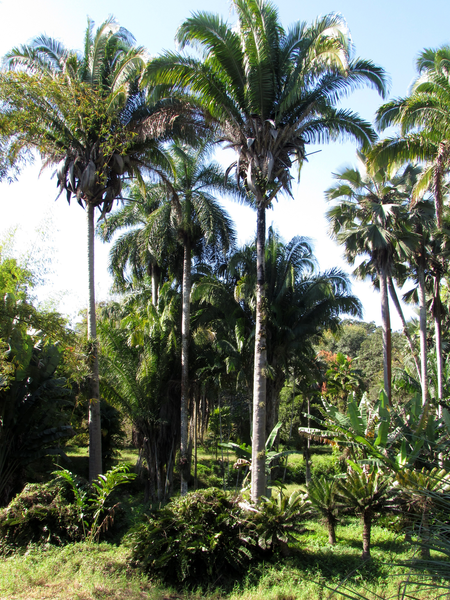 Cienfuegos Botanic Gardens