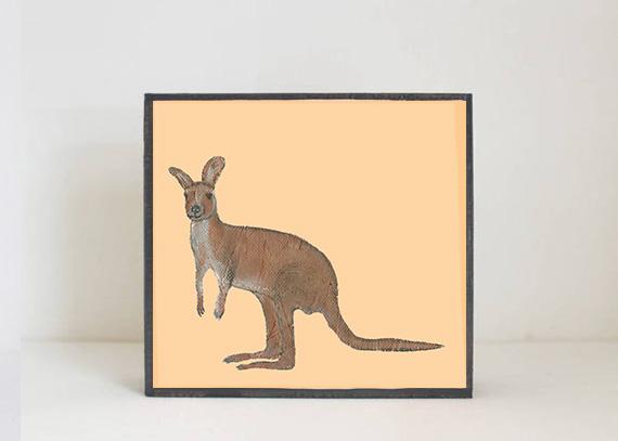 Kangaroo Side View