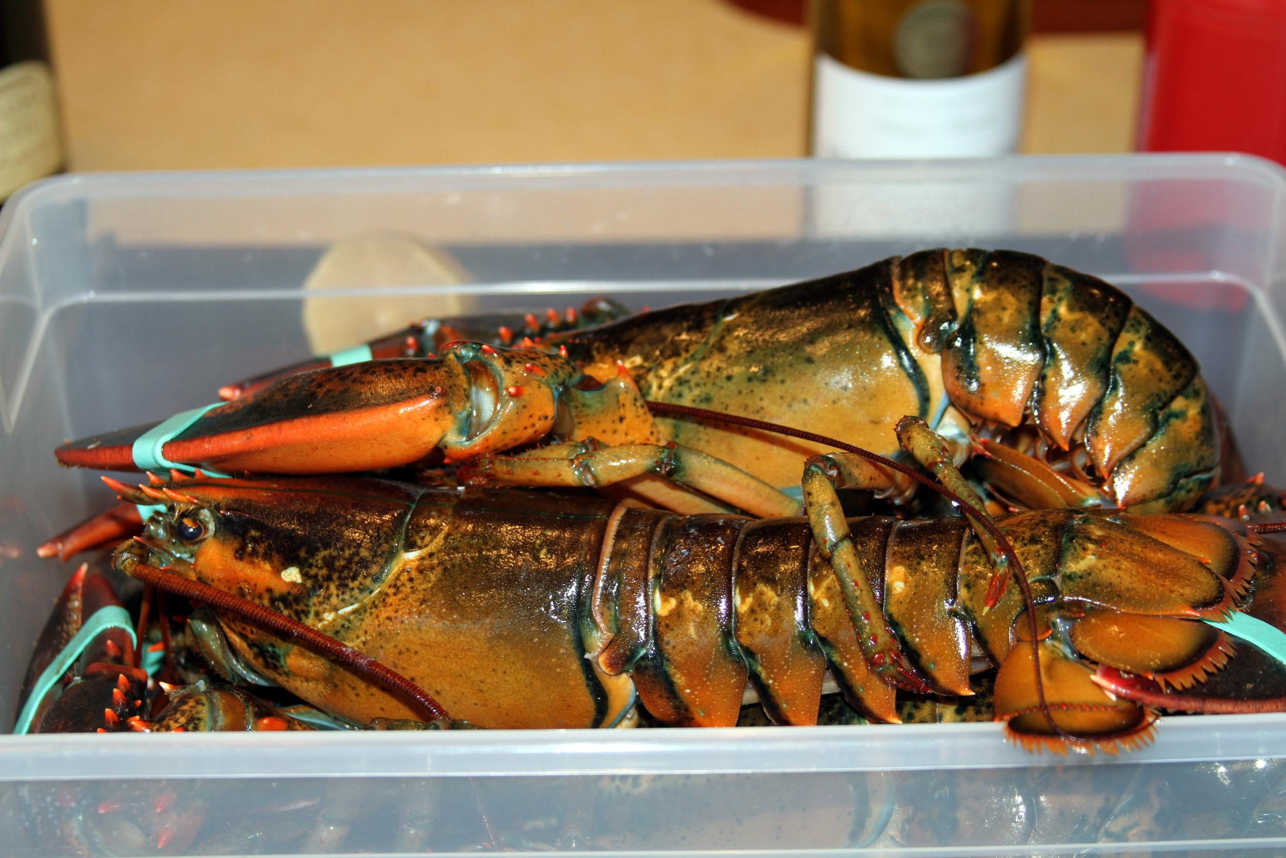 lobsters.jpg
