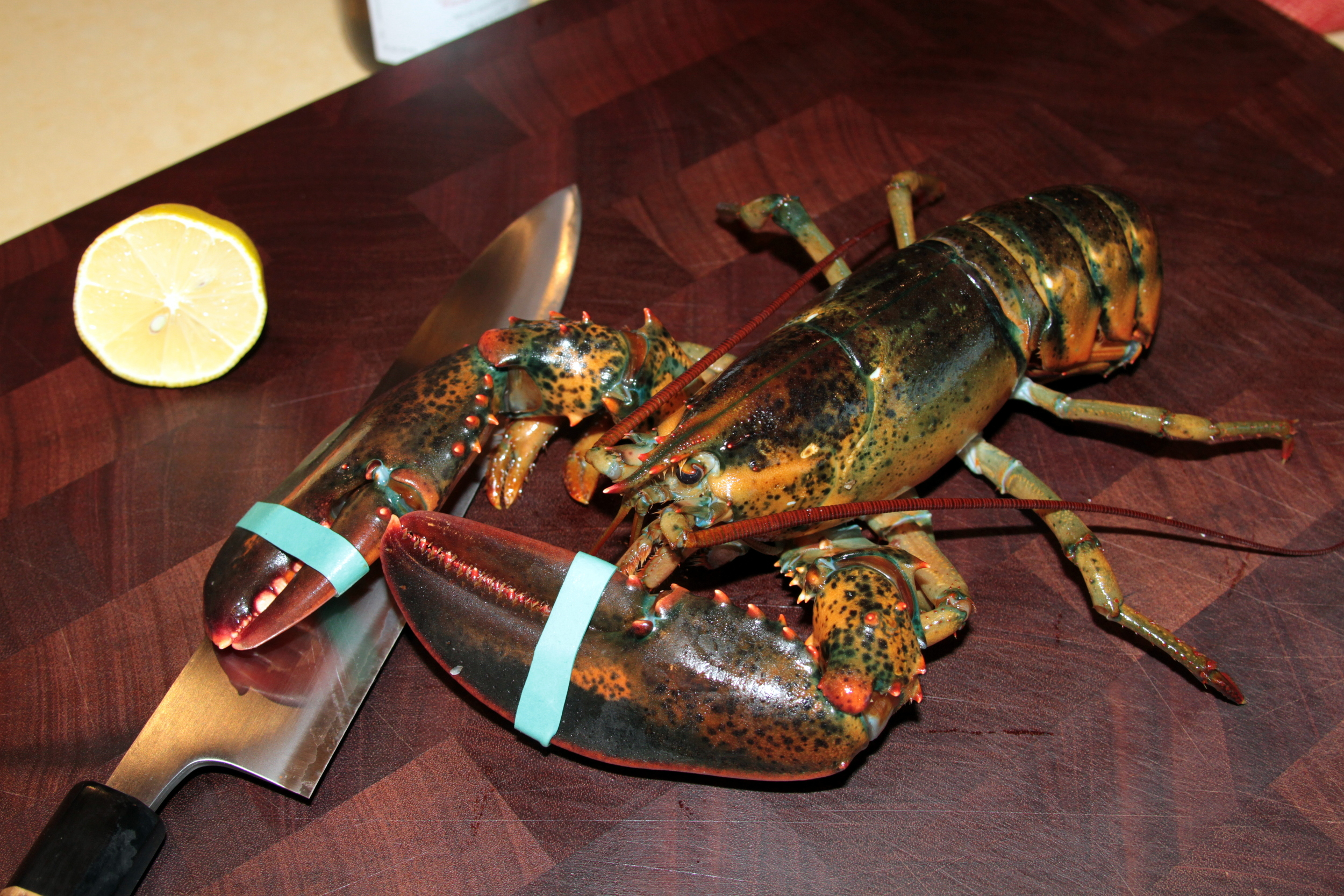 raw lobster.jpg
