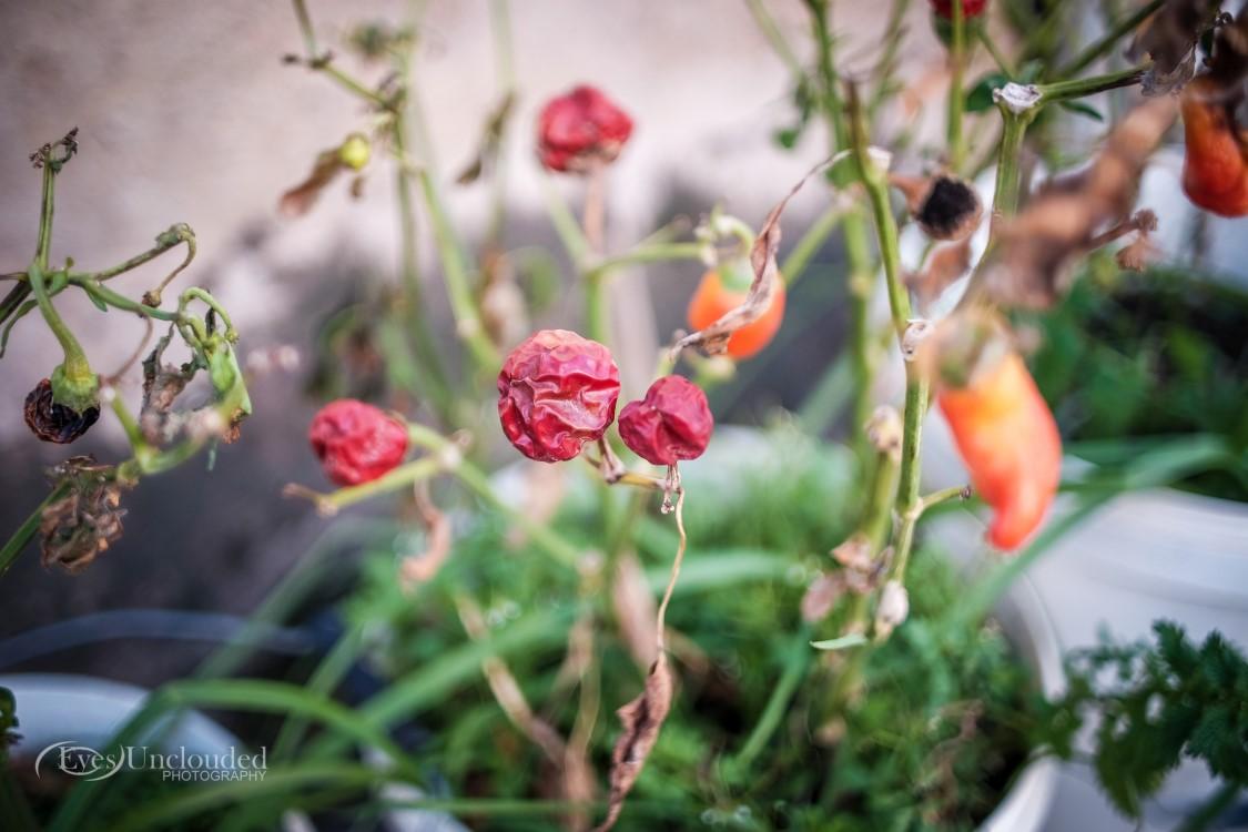 Olympus OM 35mm f/2, @f/2